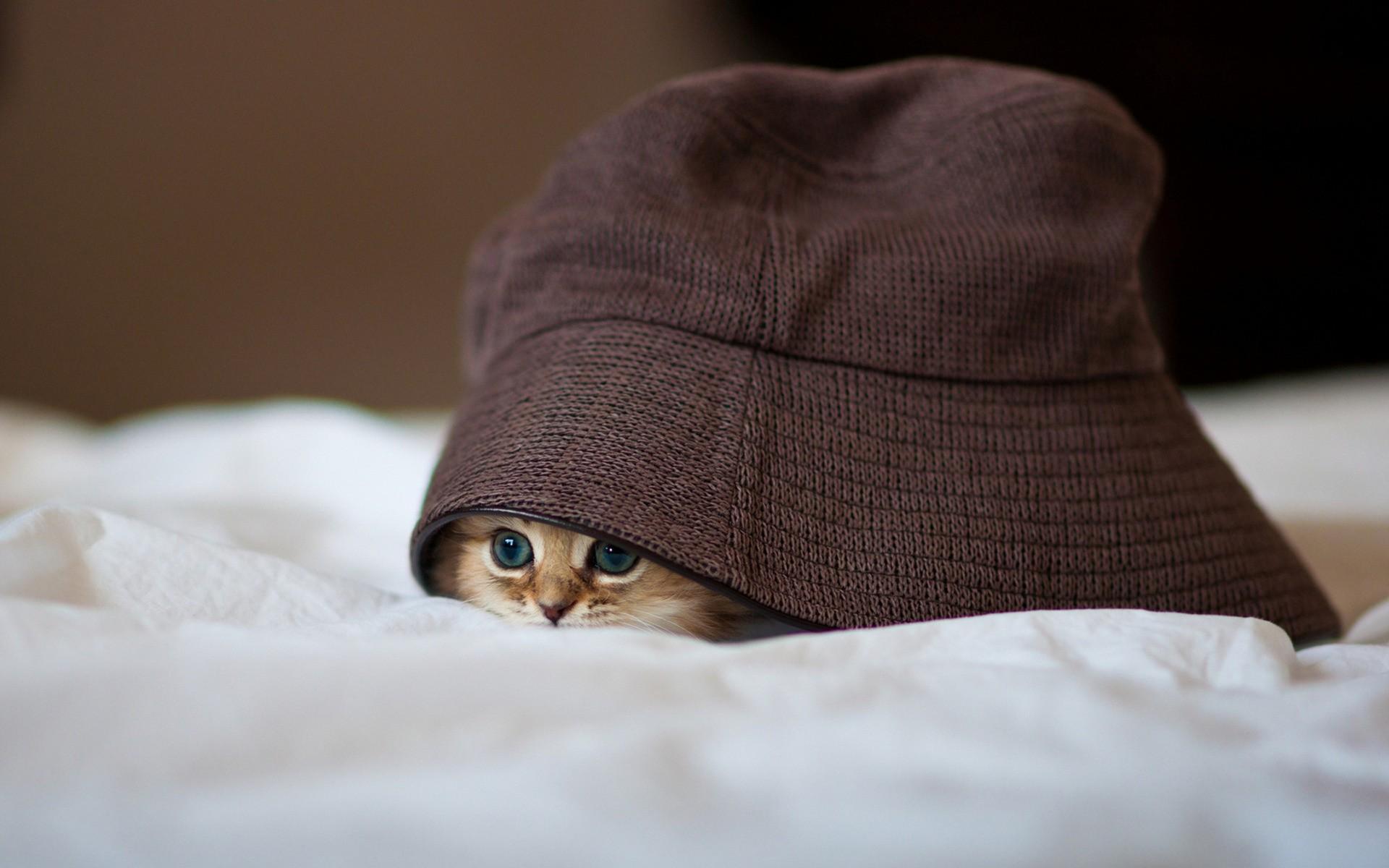 Обои шляпка, Кошка, кот. Кошки foto 18