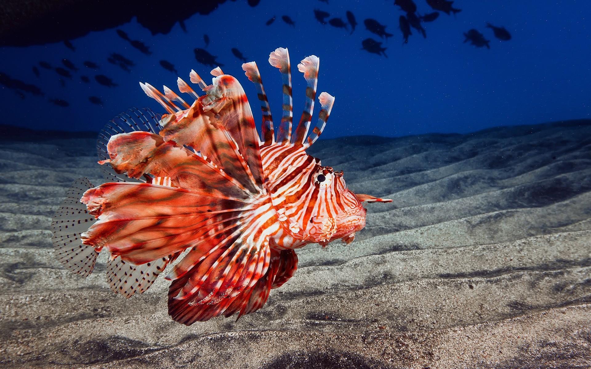 Картинки морские существа