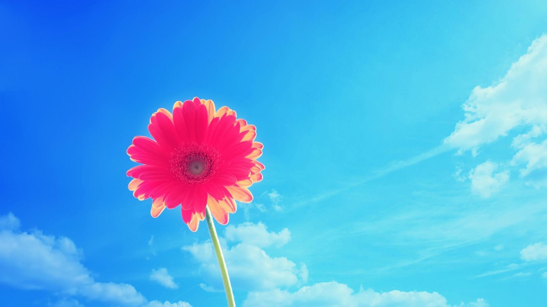 Анимации, картинки цветы на фоне неба