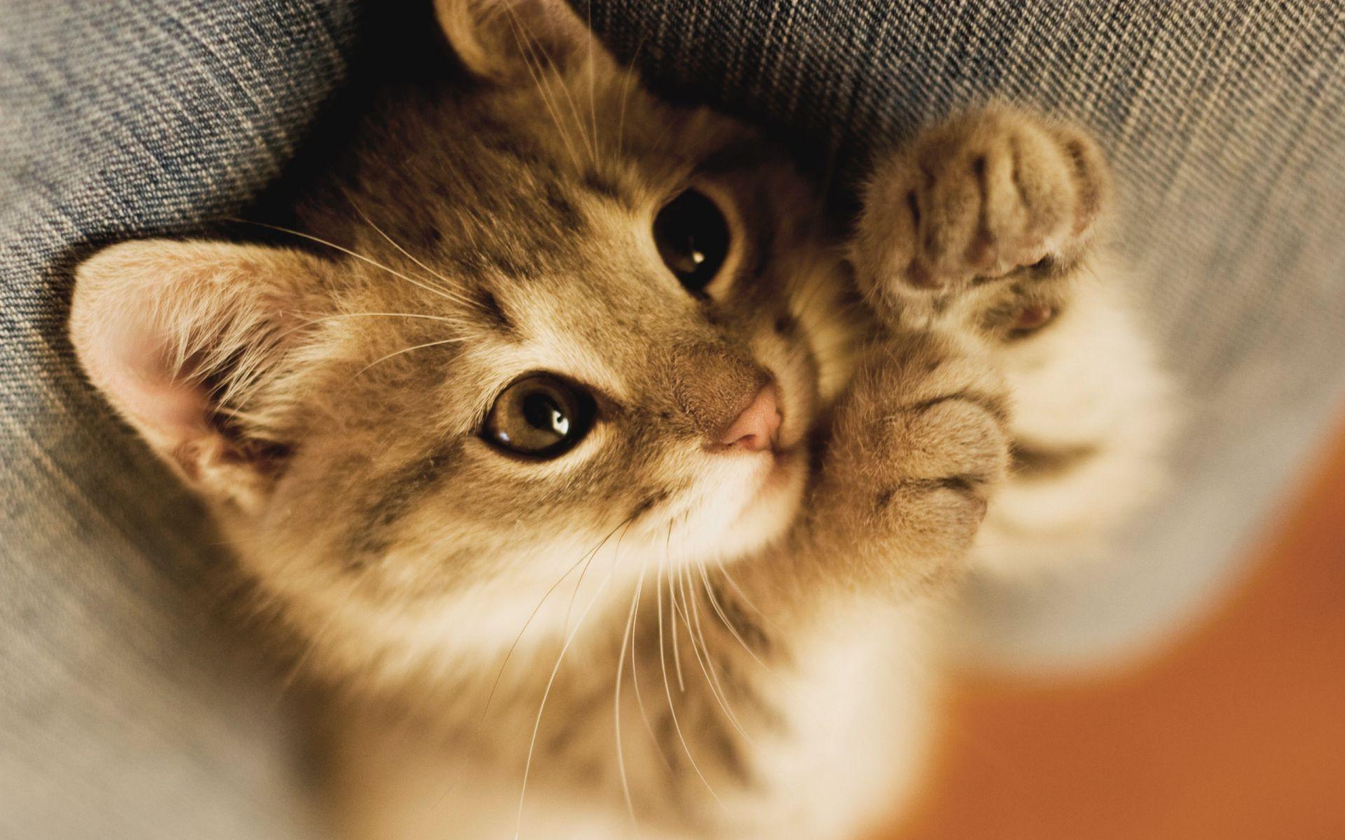 обои для рабочего стола кошки самые лучшие и няшных № 170100 загрузить