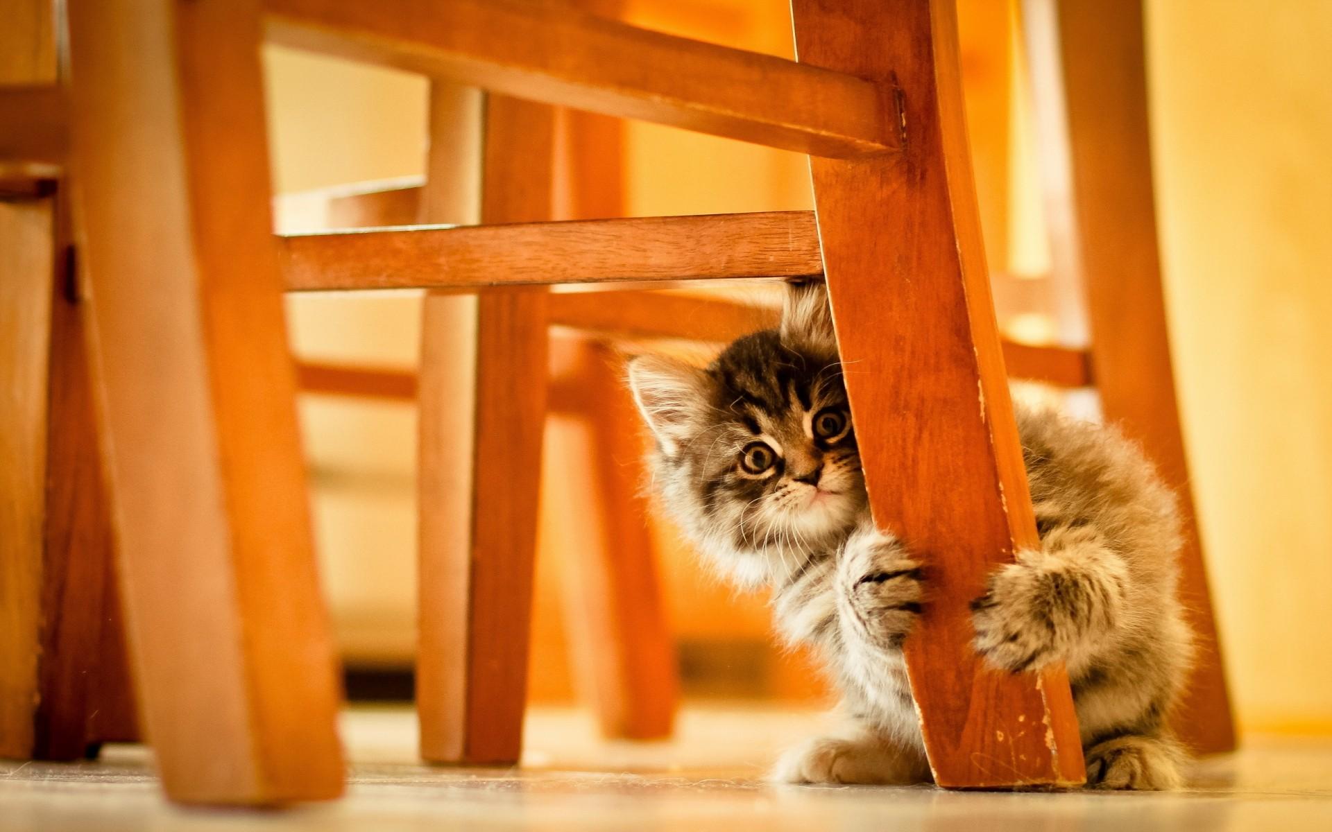 делитесь картинки на рабочий стол животные кошки смешные покажем, кто реально