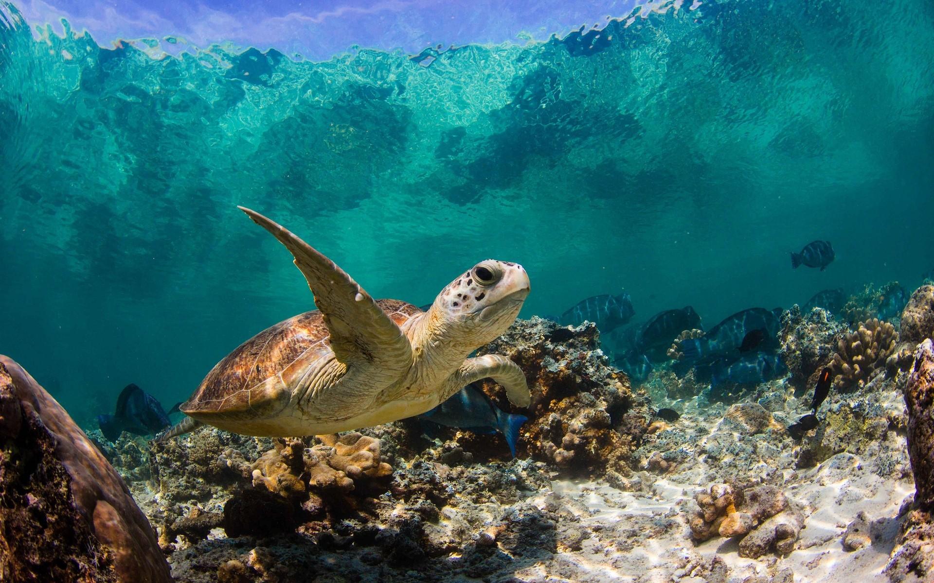 Океан самок на фото 11