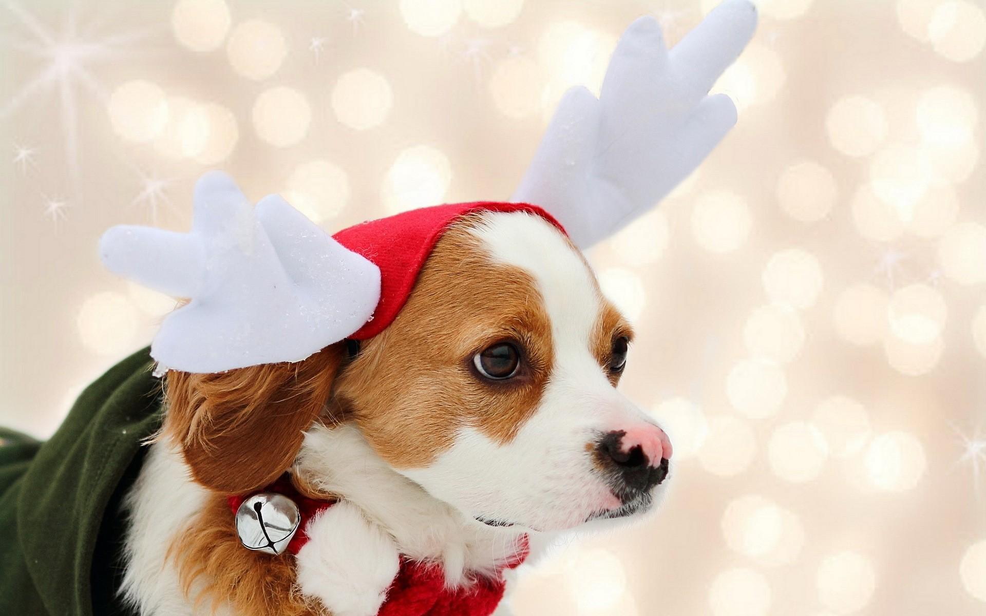 собачка в новогодней шапочке  № 1301890 без смс