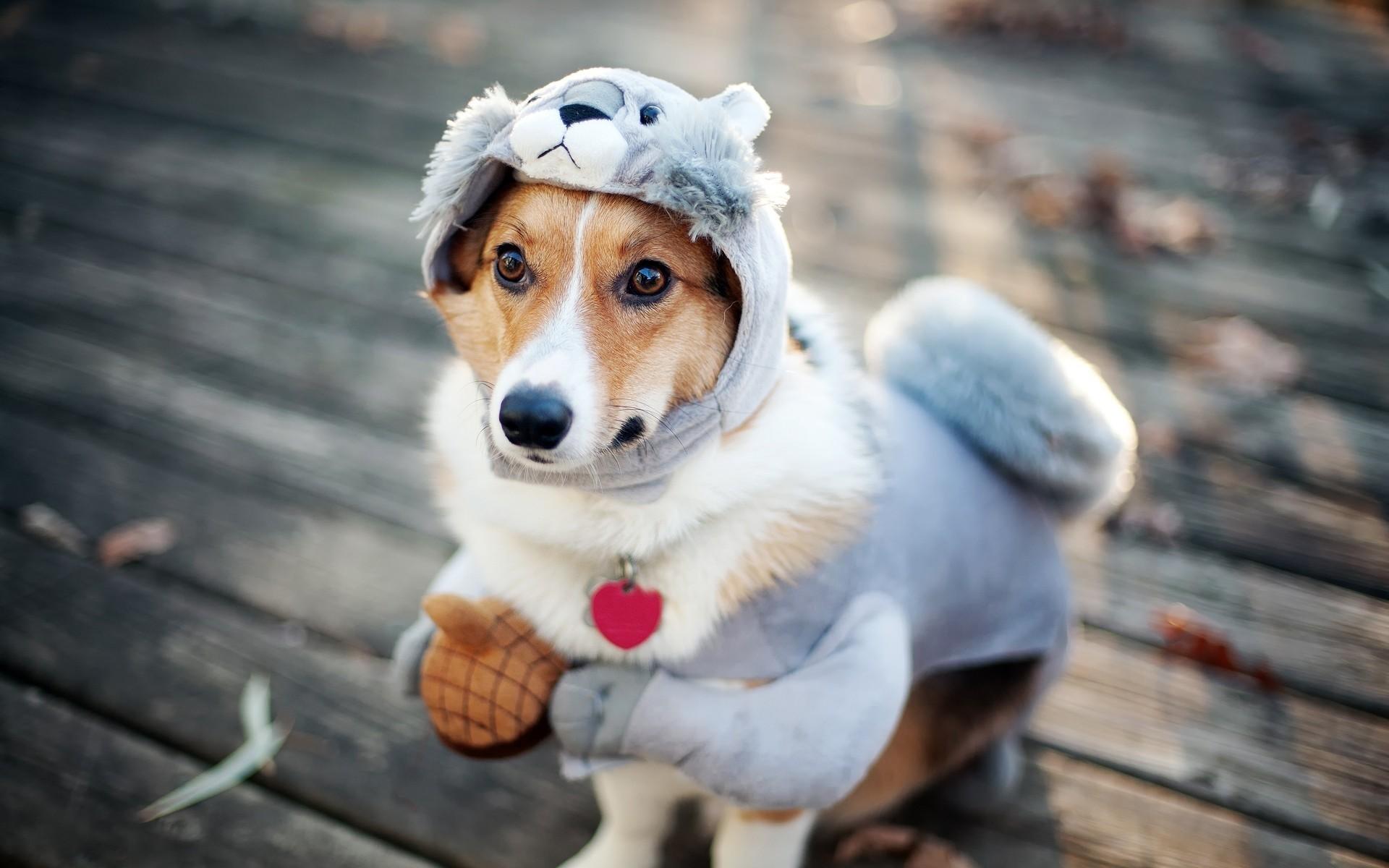 фото на аву красивые картинки животных канаде, например, популярно