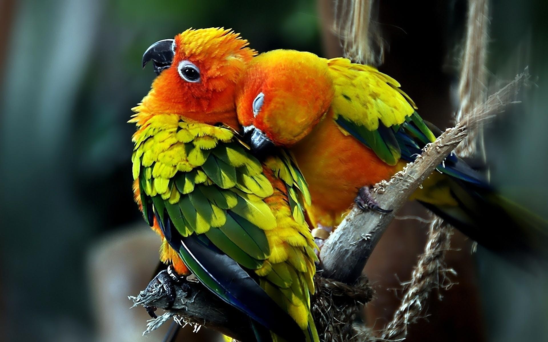 попугай краски рисунок бесплатно