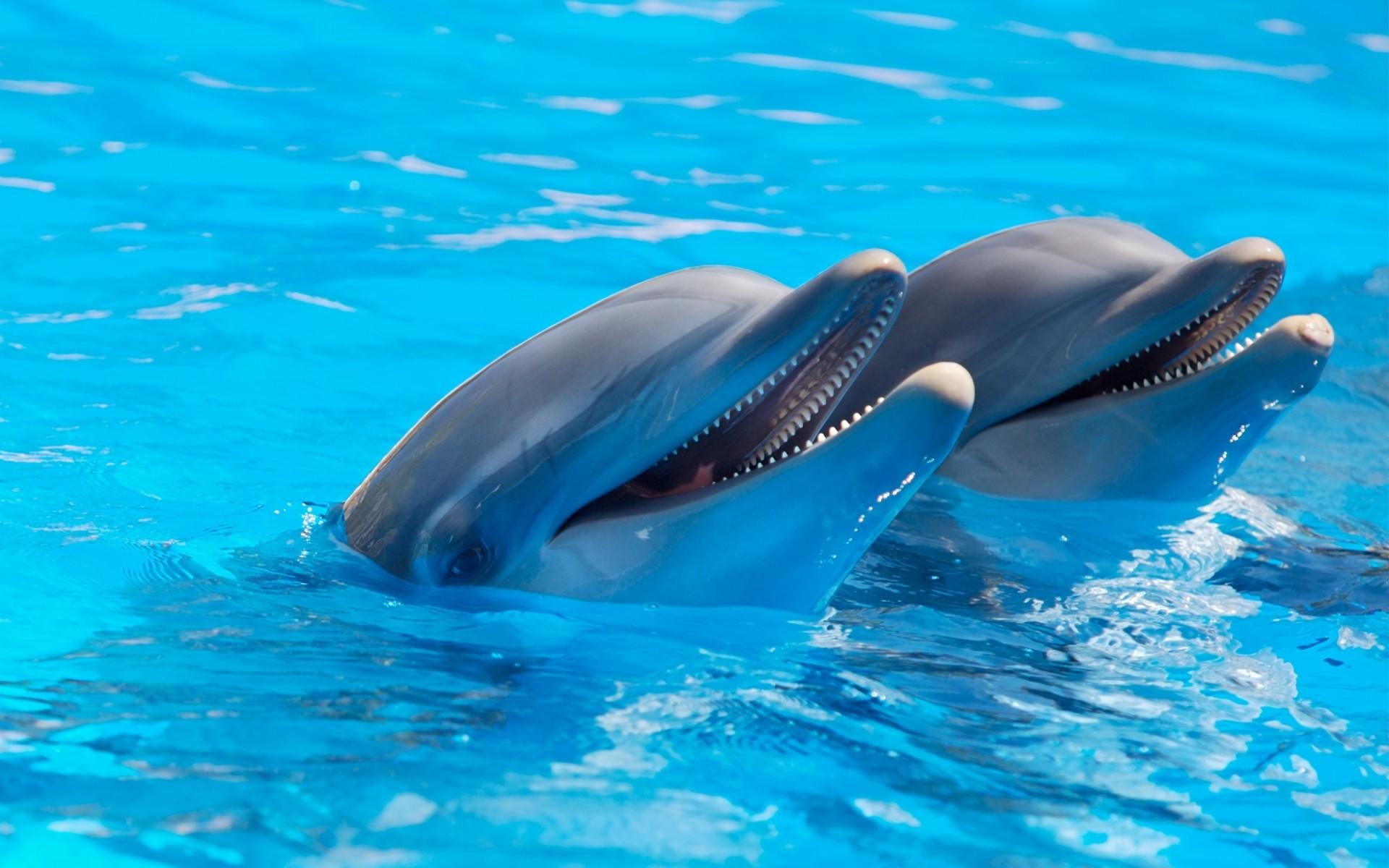 Фото с дельфинами на рабочий стол