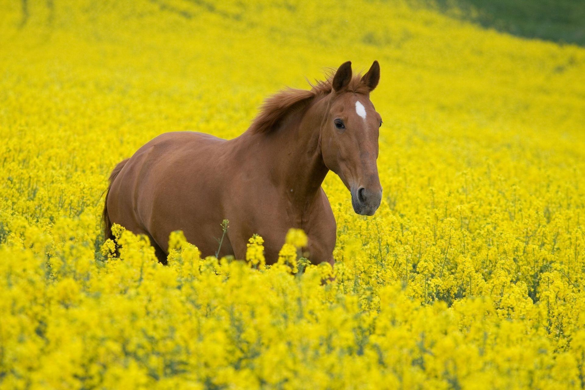 Лошадь в цветах  № 3117171  скачать
