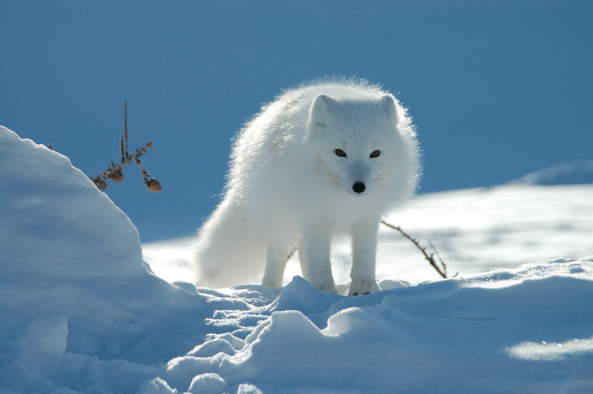 Картинки на рабочий стол о животных зимой