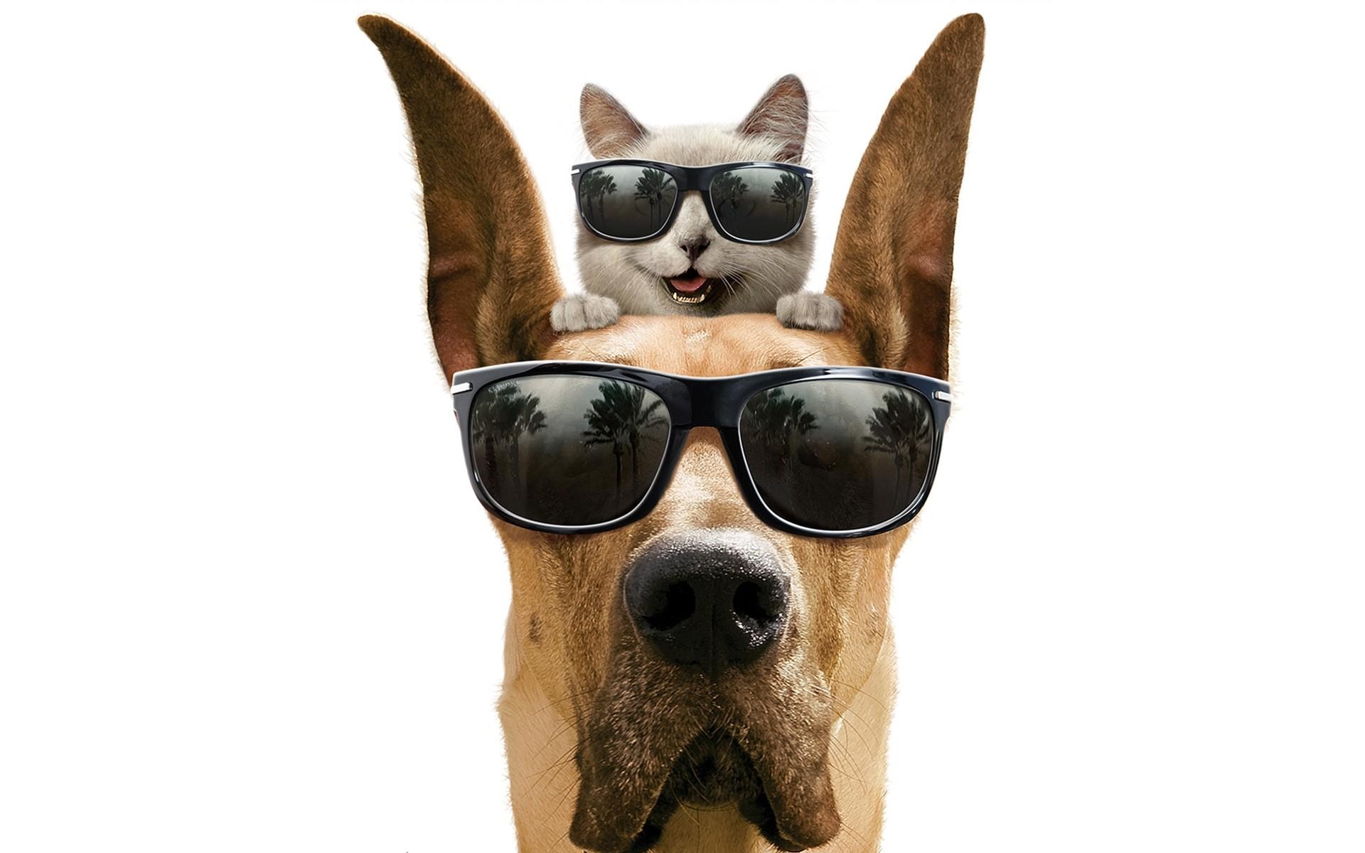 Картинки прикольные с собаками мультяшные надписями