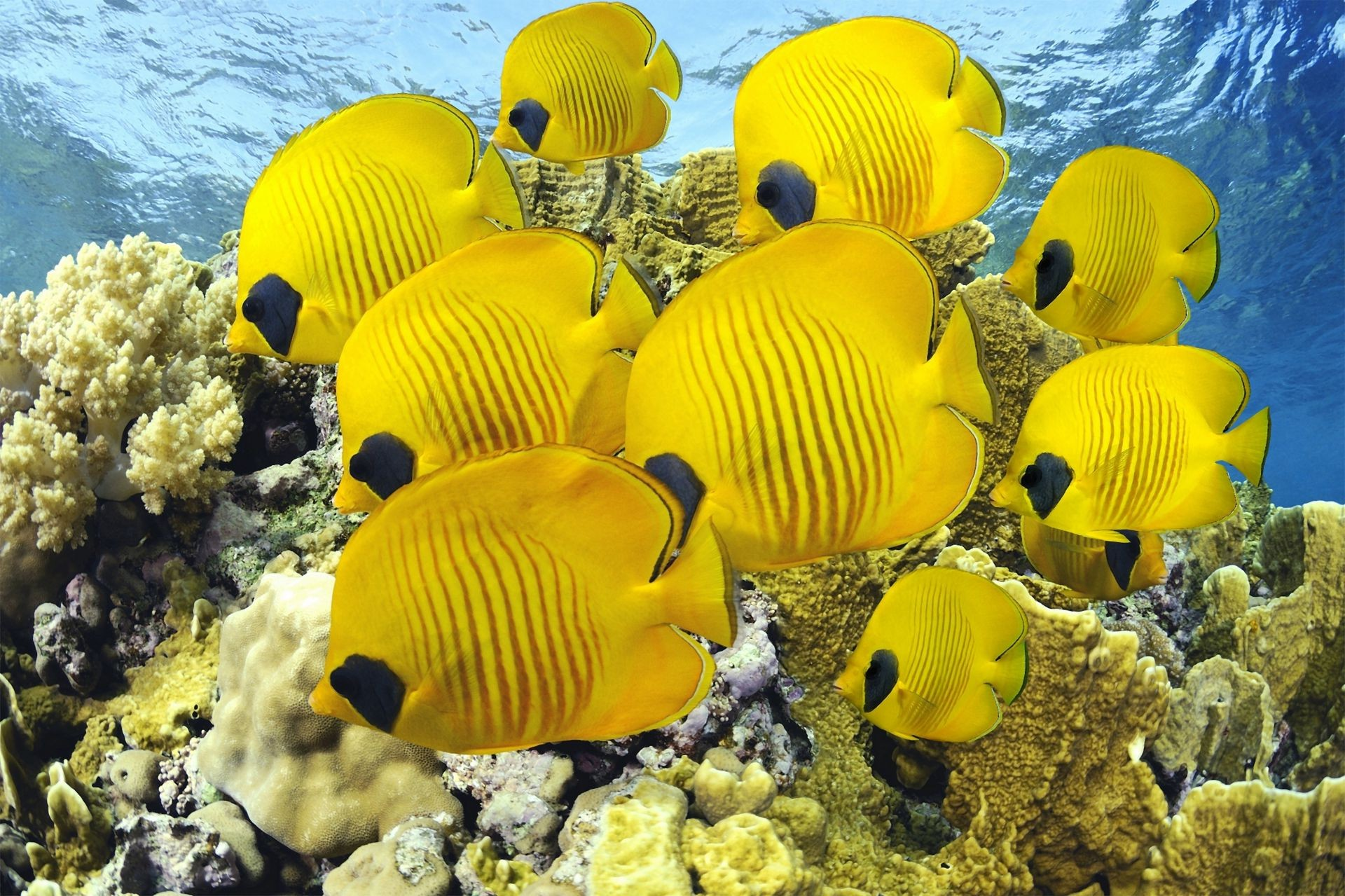 общем, название и фото самых красивых морских животных себя
