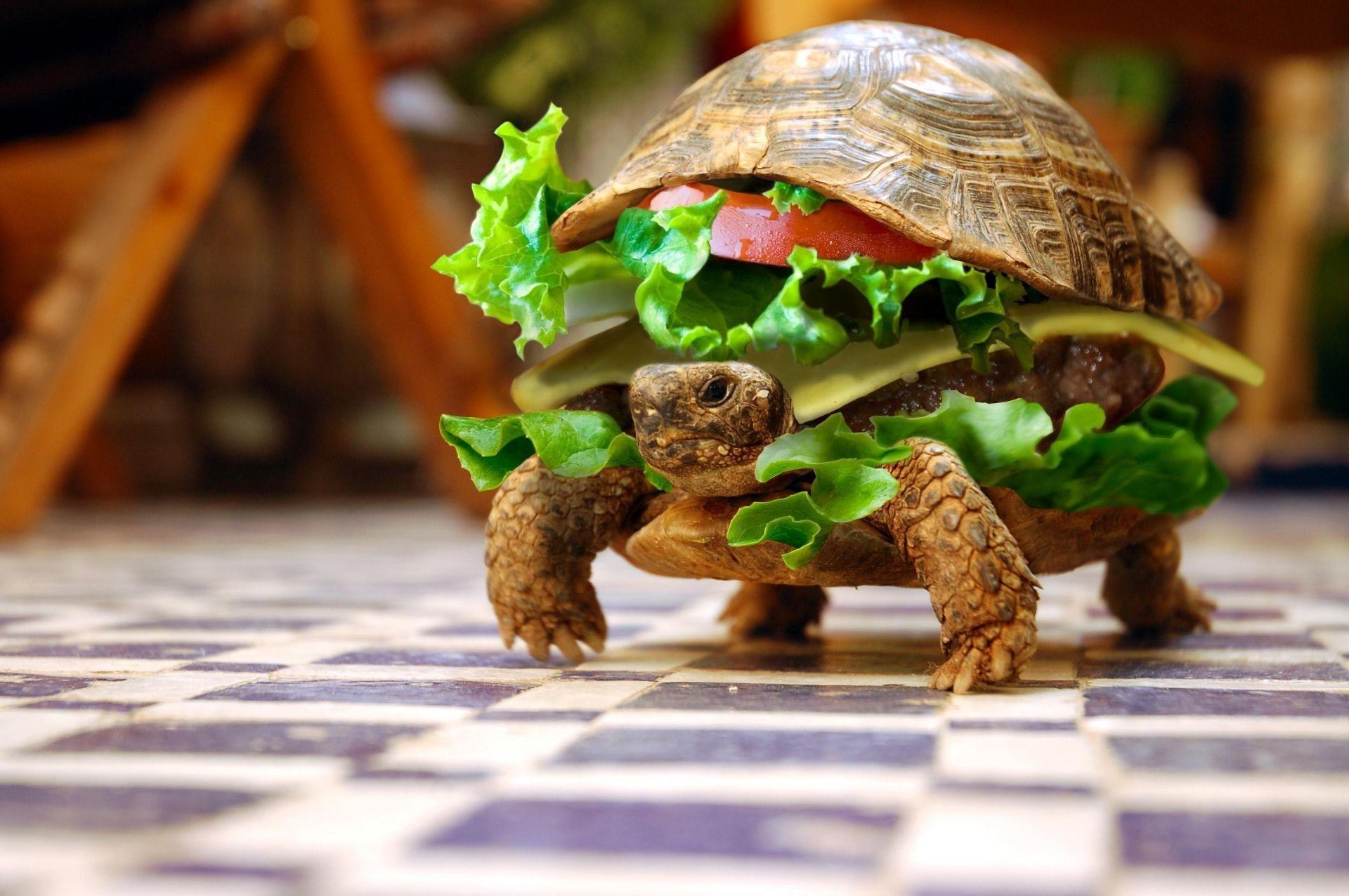 Смешные картинки для рабочего стола с животными