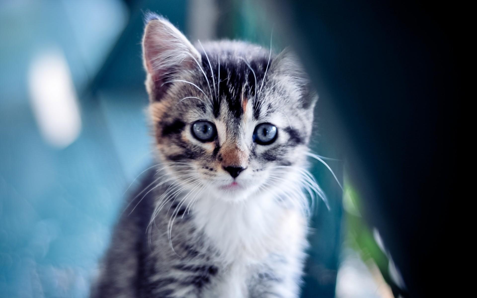 Картинки котята на обложку