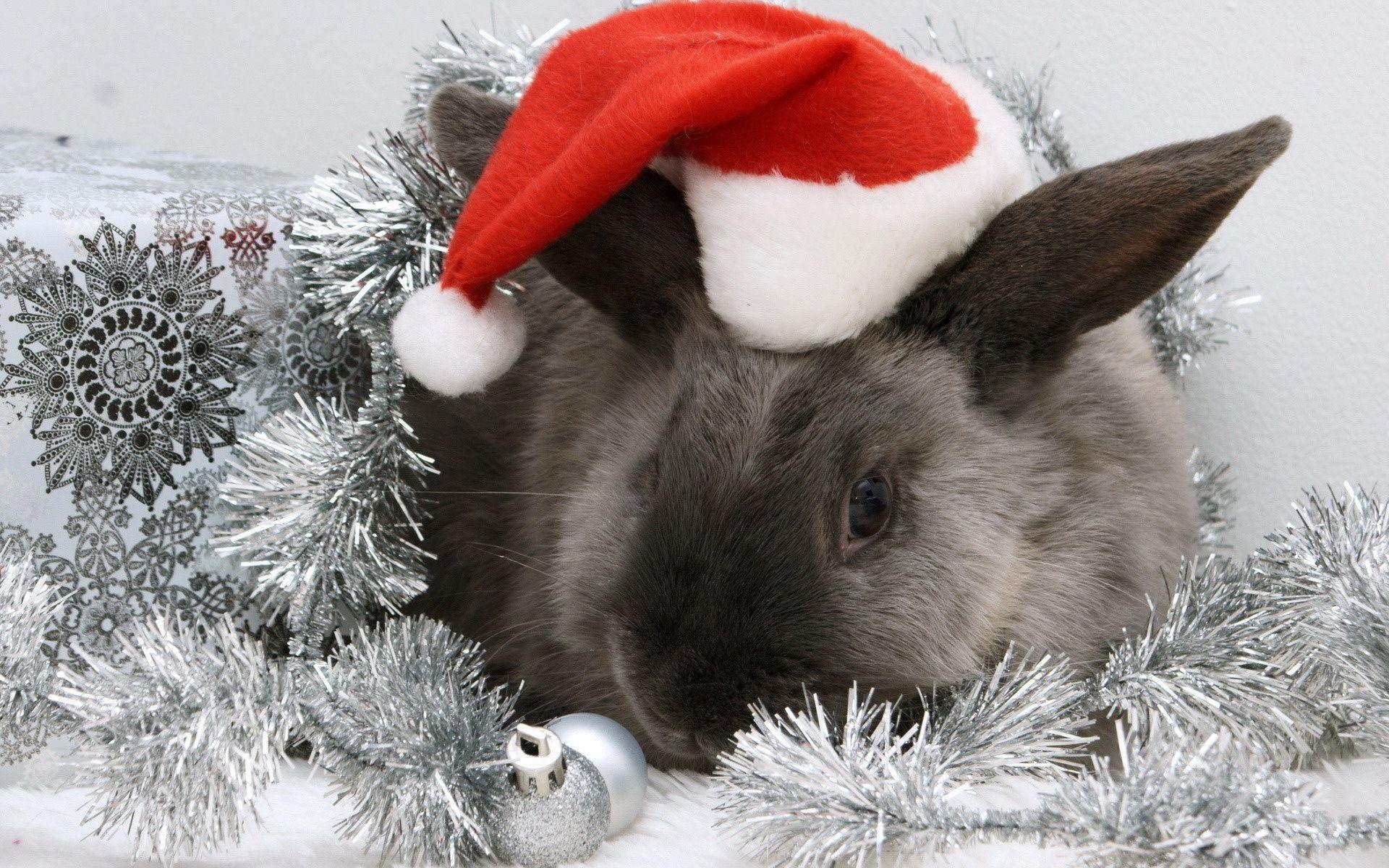 С новым годом в год кролика