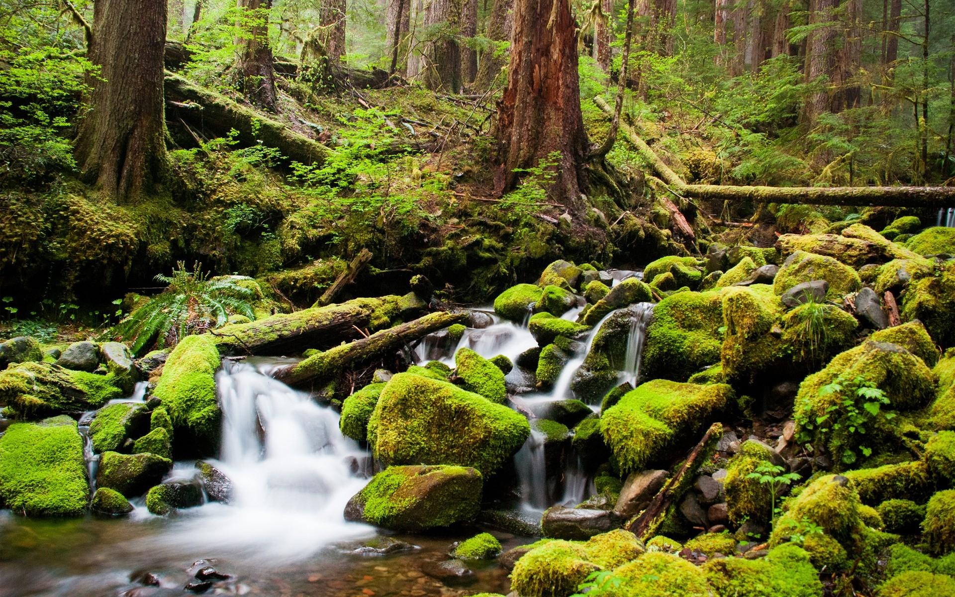 природа камни река деревья nature stones river trees скачать