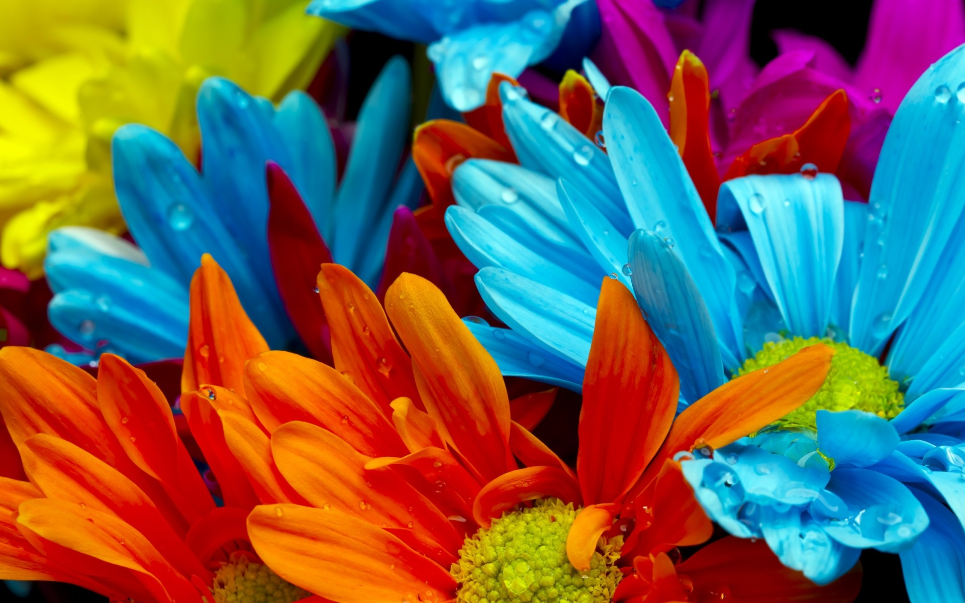 Фото цветы заставка