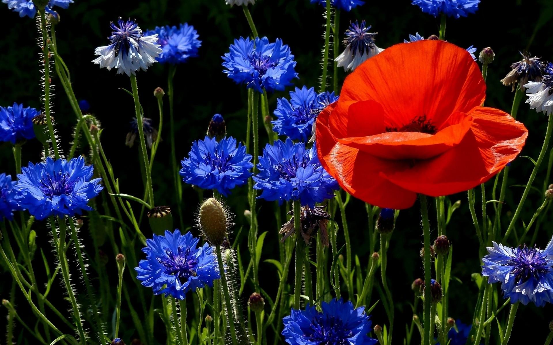 Красивые цветы картинки на рабочий стол