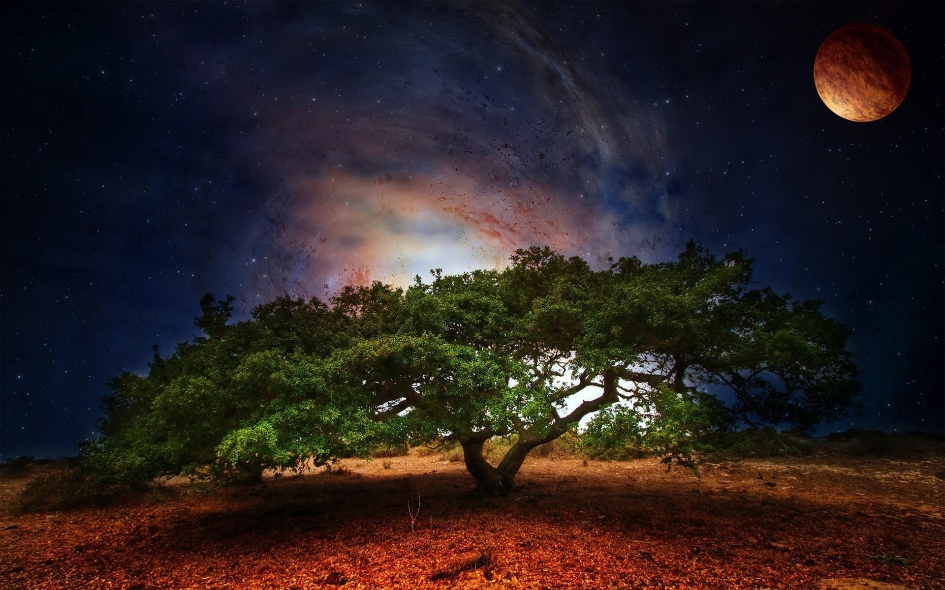 Обои природа небо деревья космос картинки на рабочий стол на тему Космос - скачать скачать
