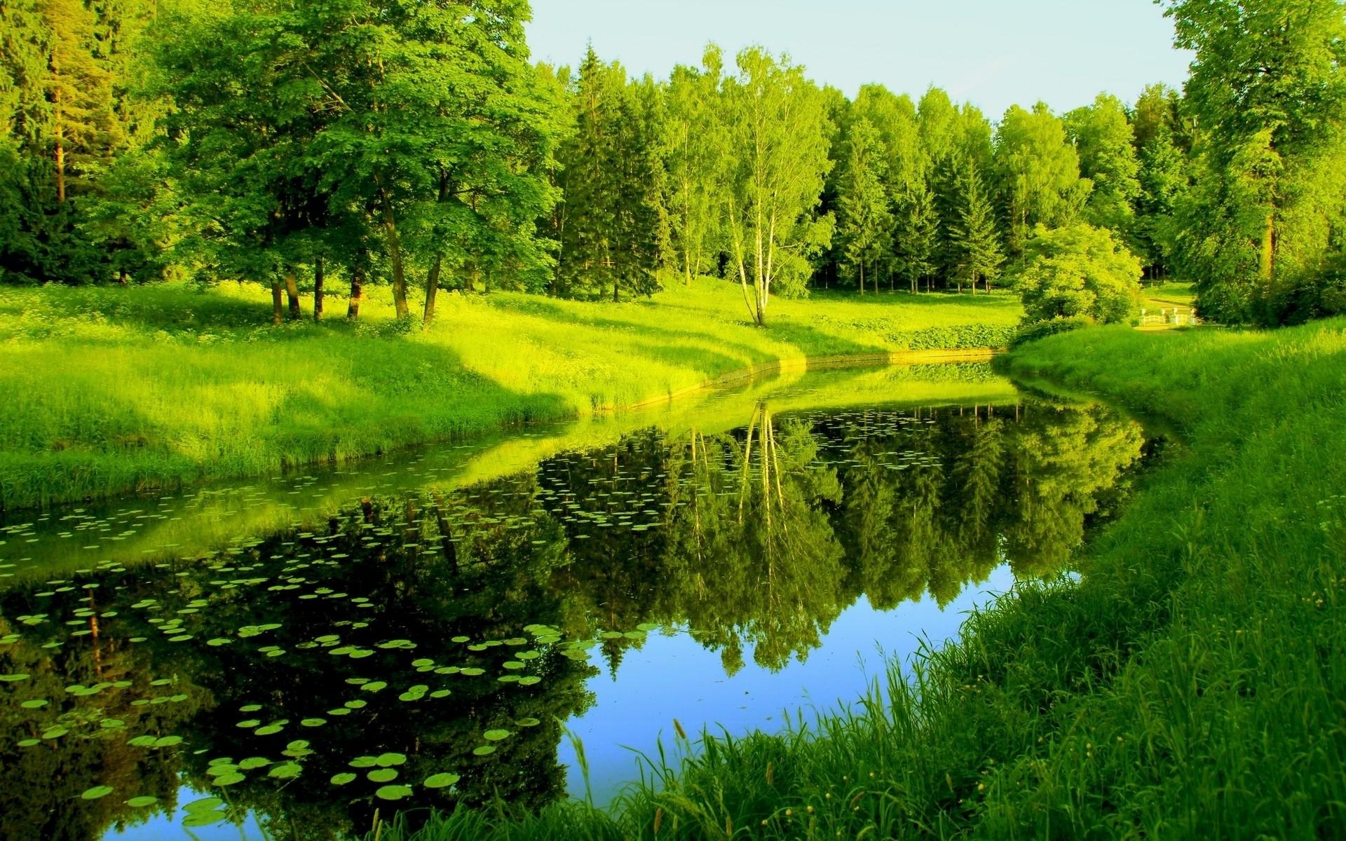 Прикольной змейки, картинки природа россии лето