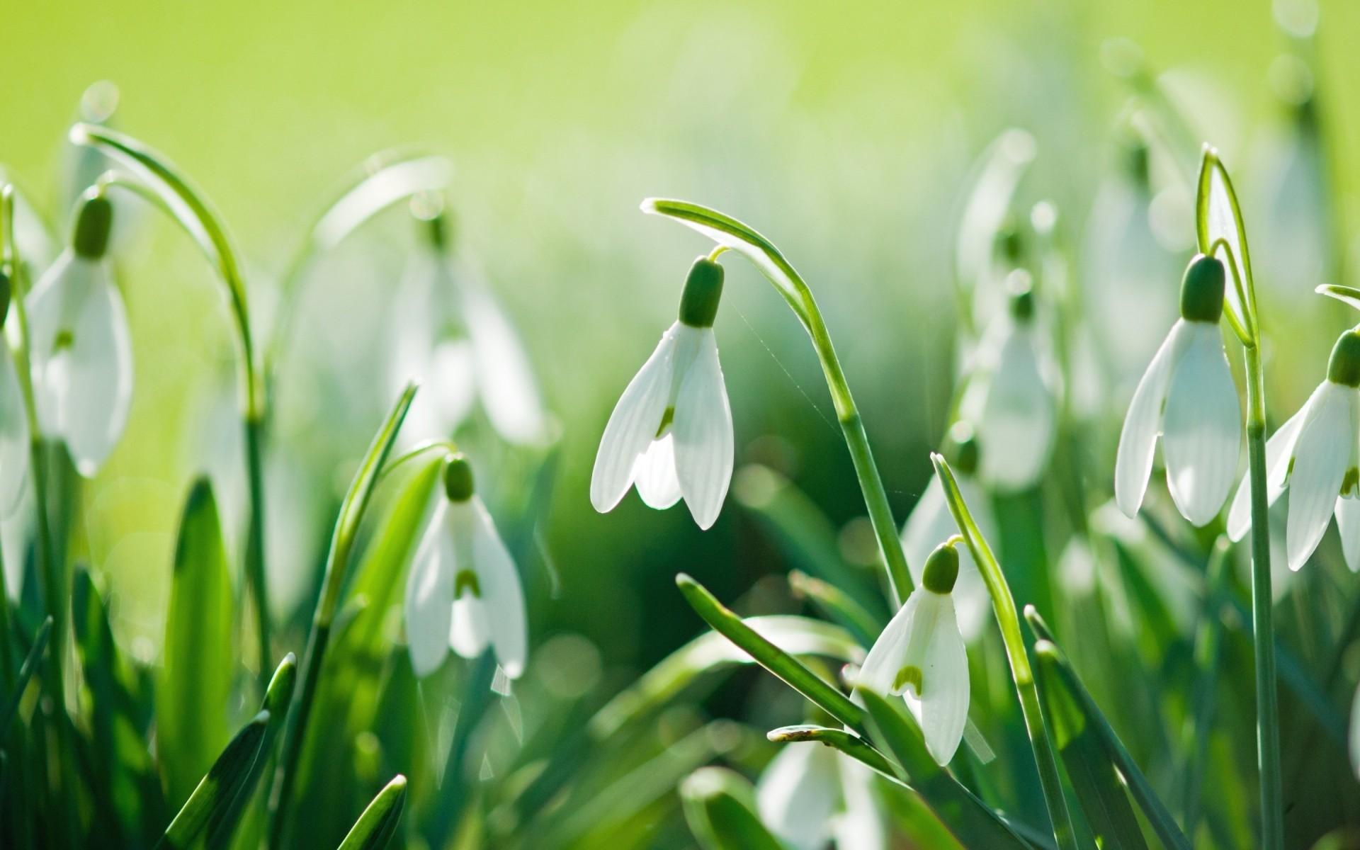 Картинки о природе весна красивые