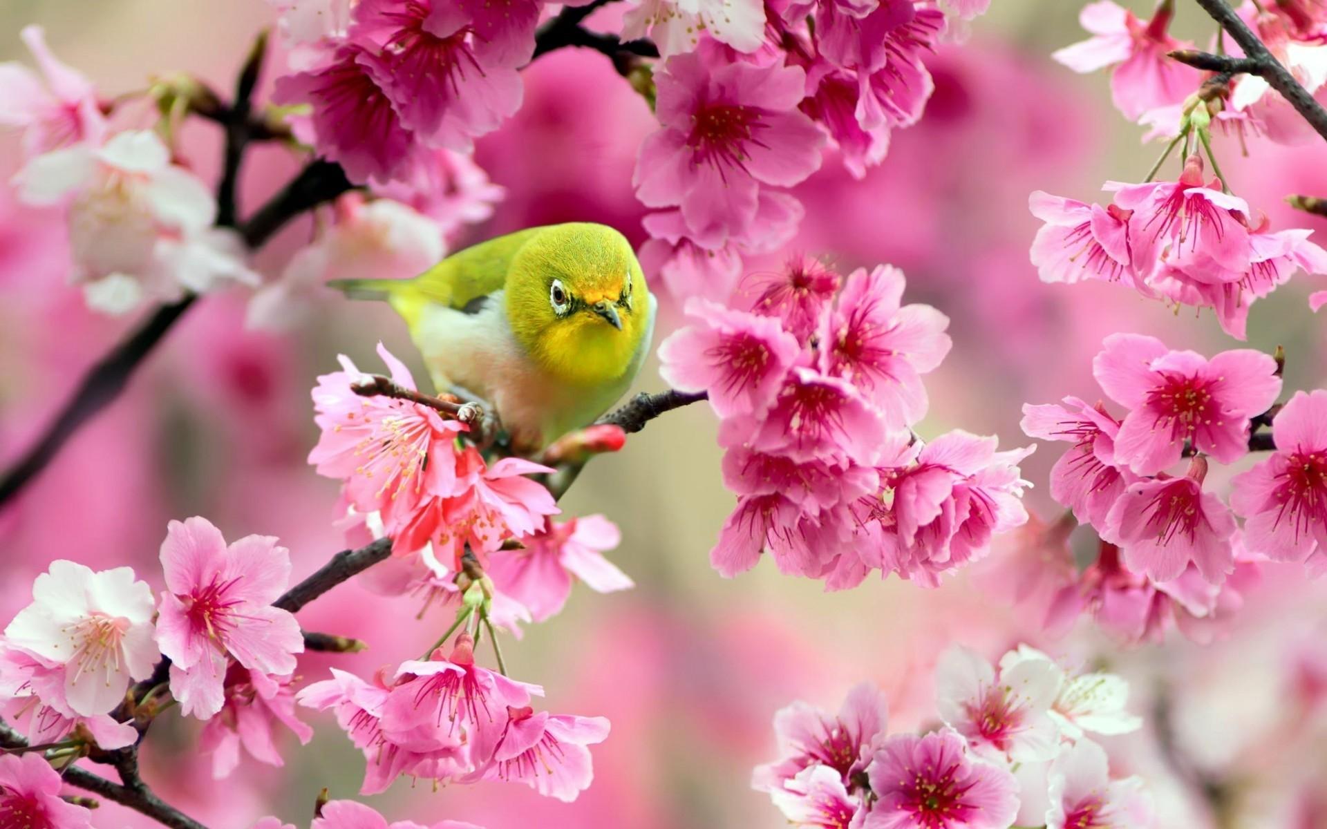 медогонку сайте птицы фото для смартфона краевая
