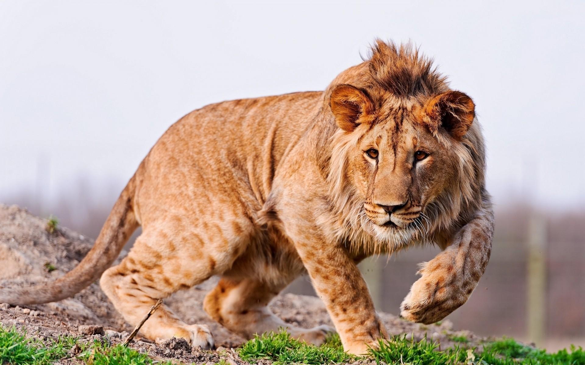 Картинка дикие звери
