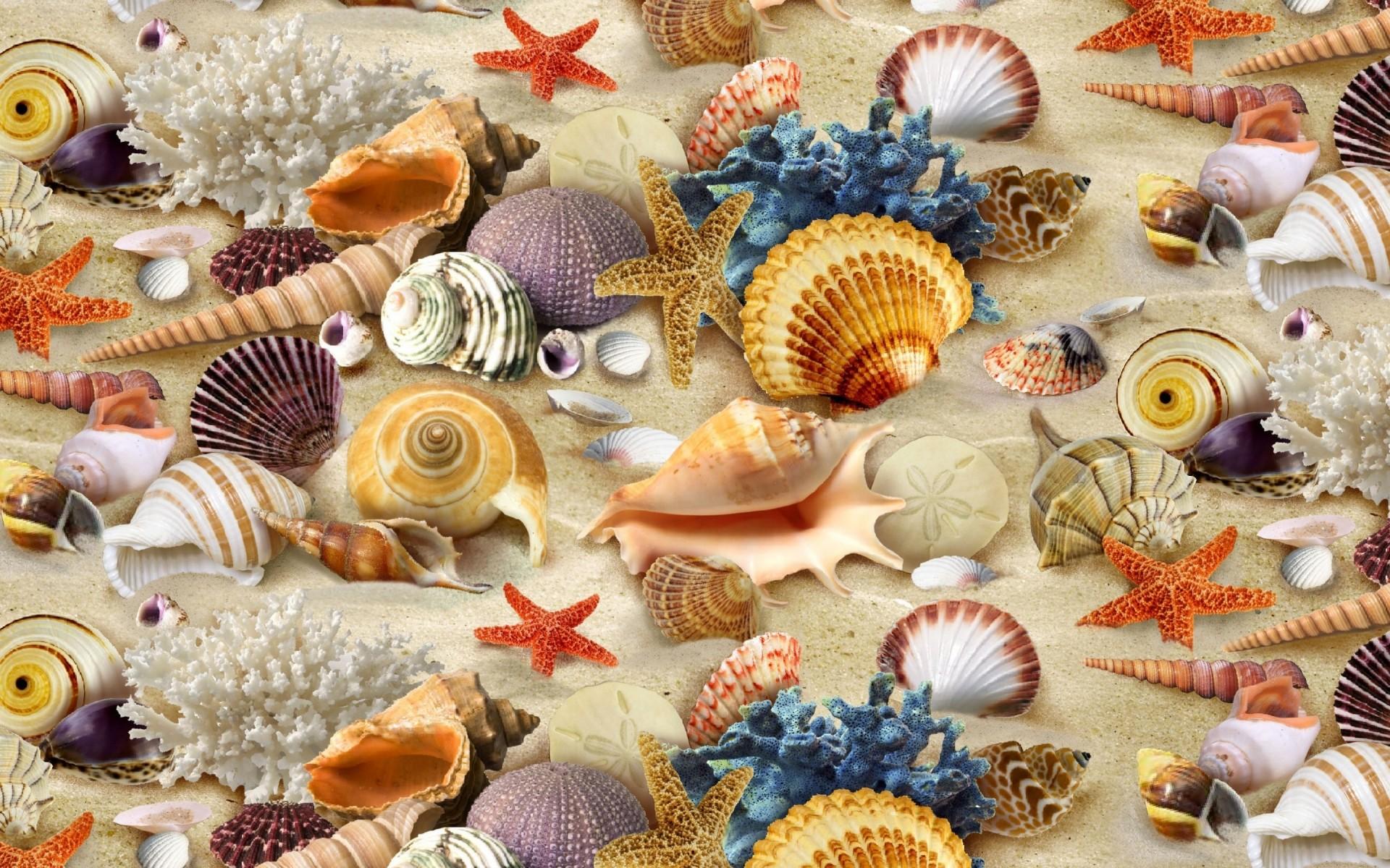 Картинки с ракушками и морскими, днем рождения сашенька