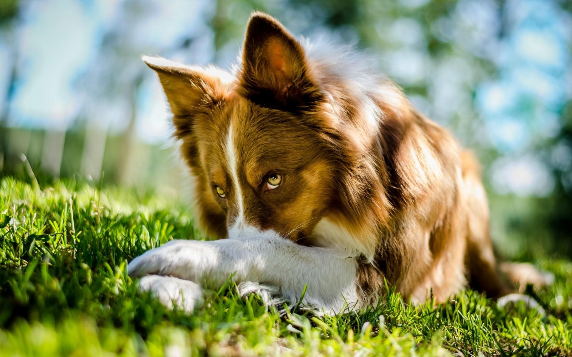 самые красивые собаки картинки на обои как описывает лот