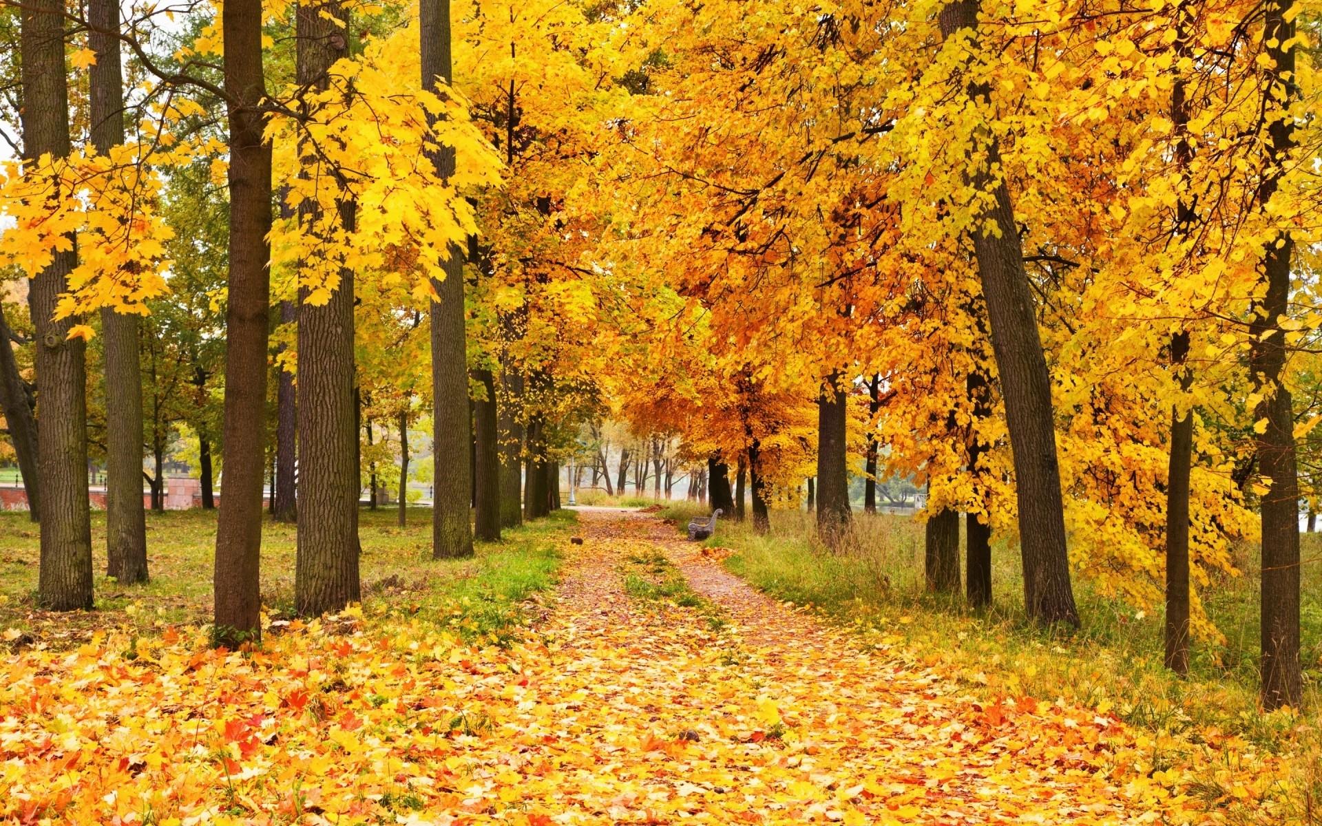Купить пейзаж в Москве картины пейзажи маслом