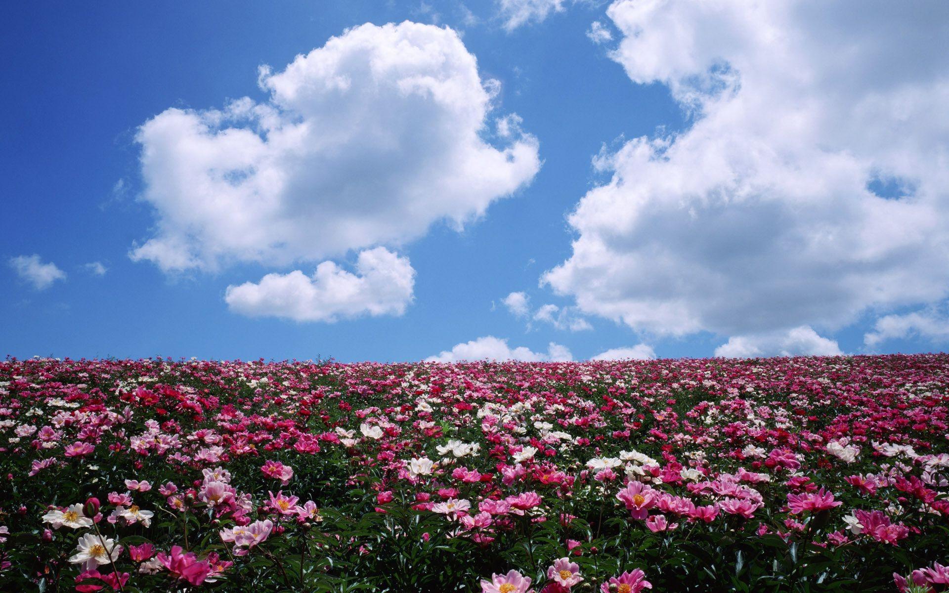 Надписью зачем, картинки природа поле цветов