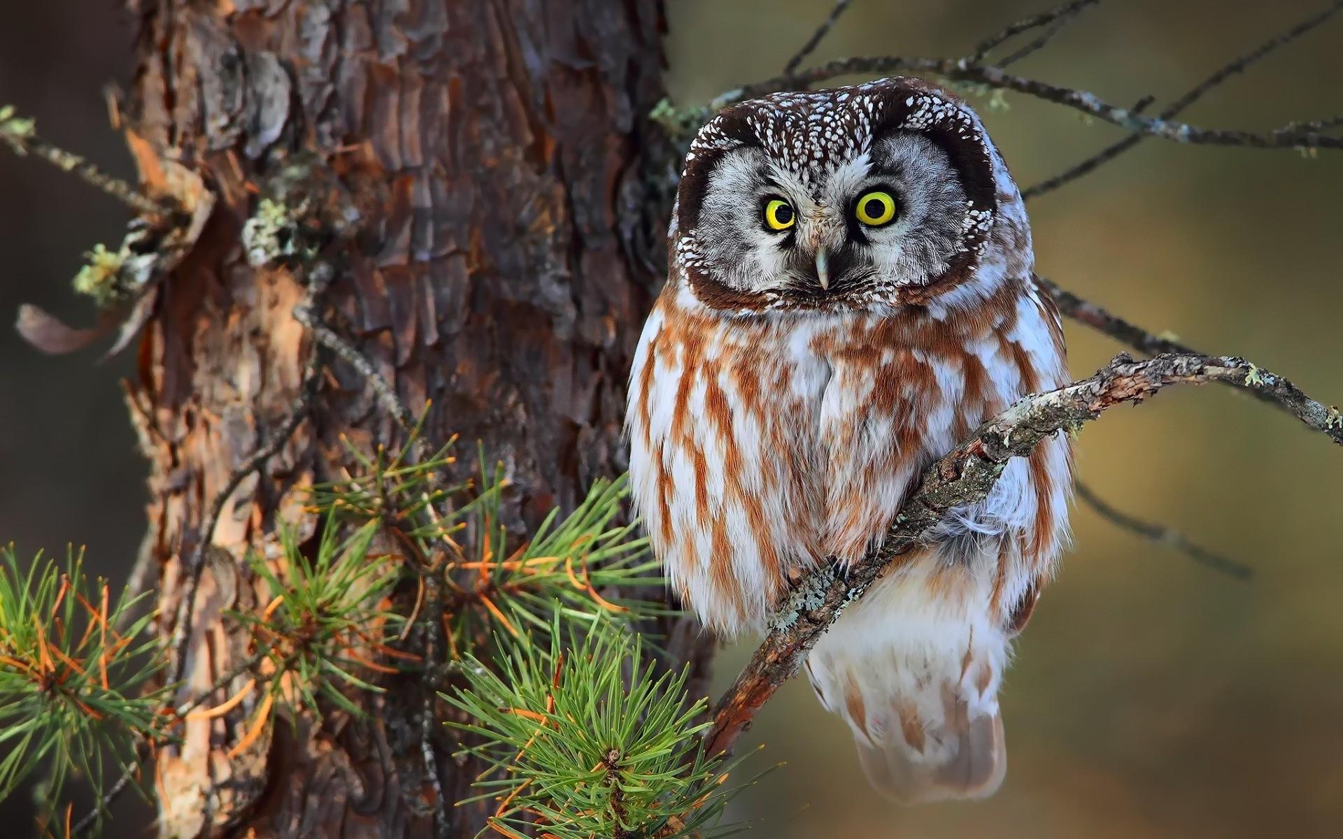 много необычных прикольные фотографии птиц и животных в лесу часто