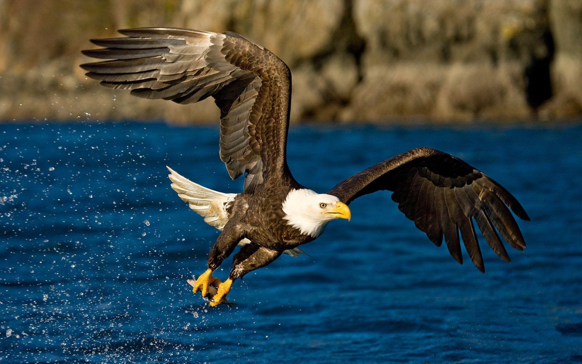 орел фотографии птица динамике цвета