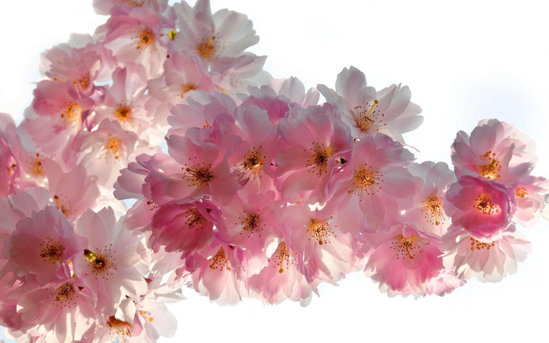 Фото цветов ветка