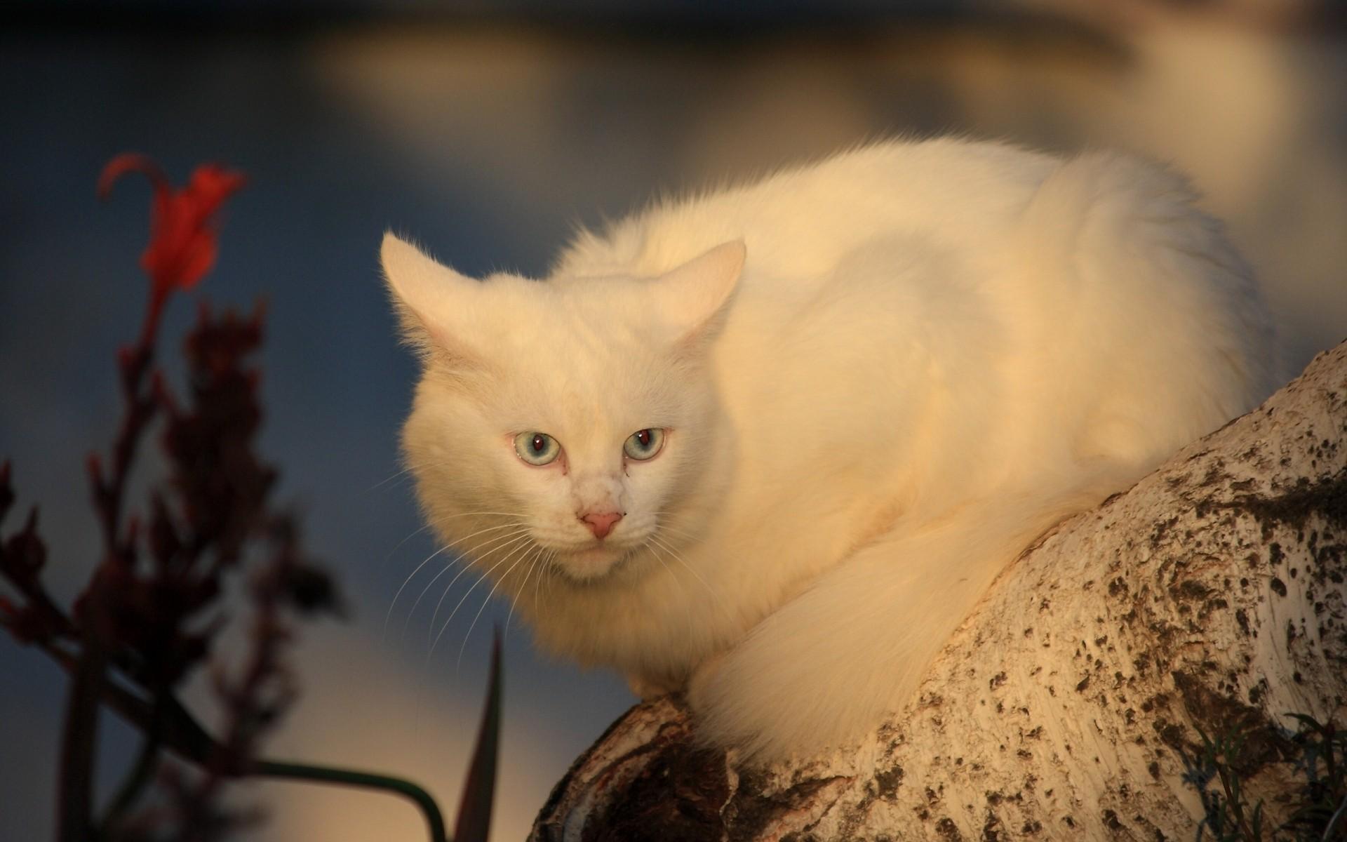 Белая кошечка картинки, шаблон открытку для