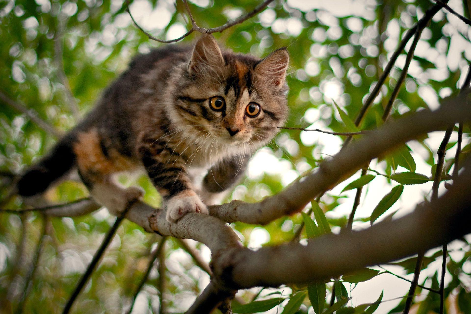 кот животное природа  № 2038120 бесплатно