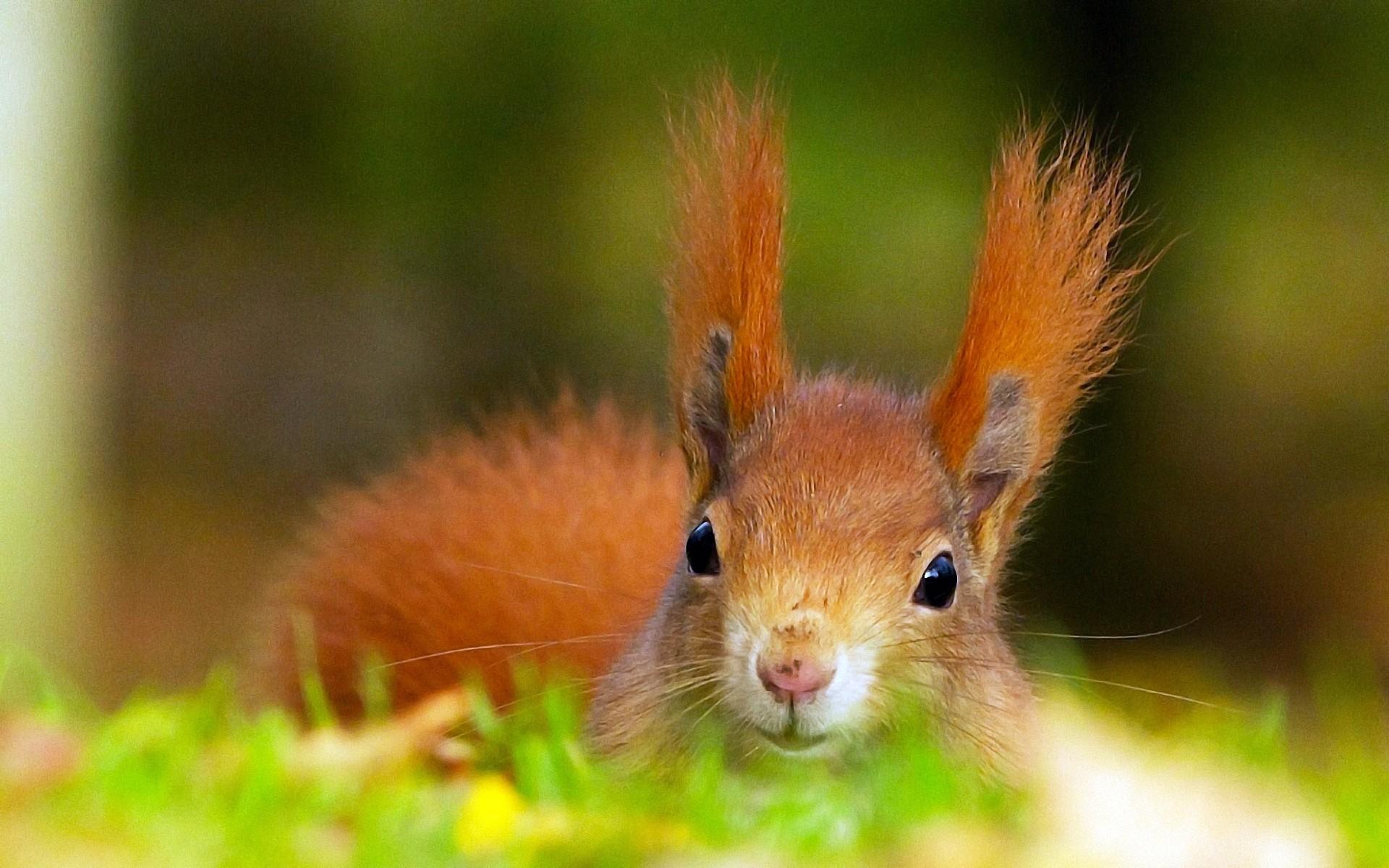 Картинки на рабочий стол животные милые природа
