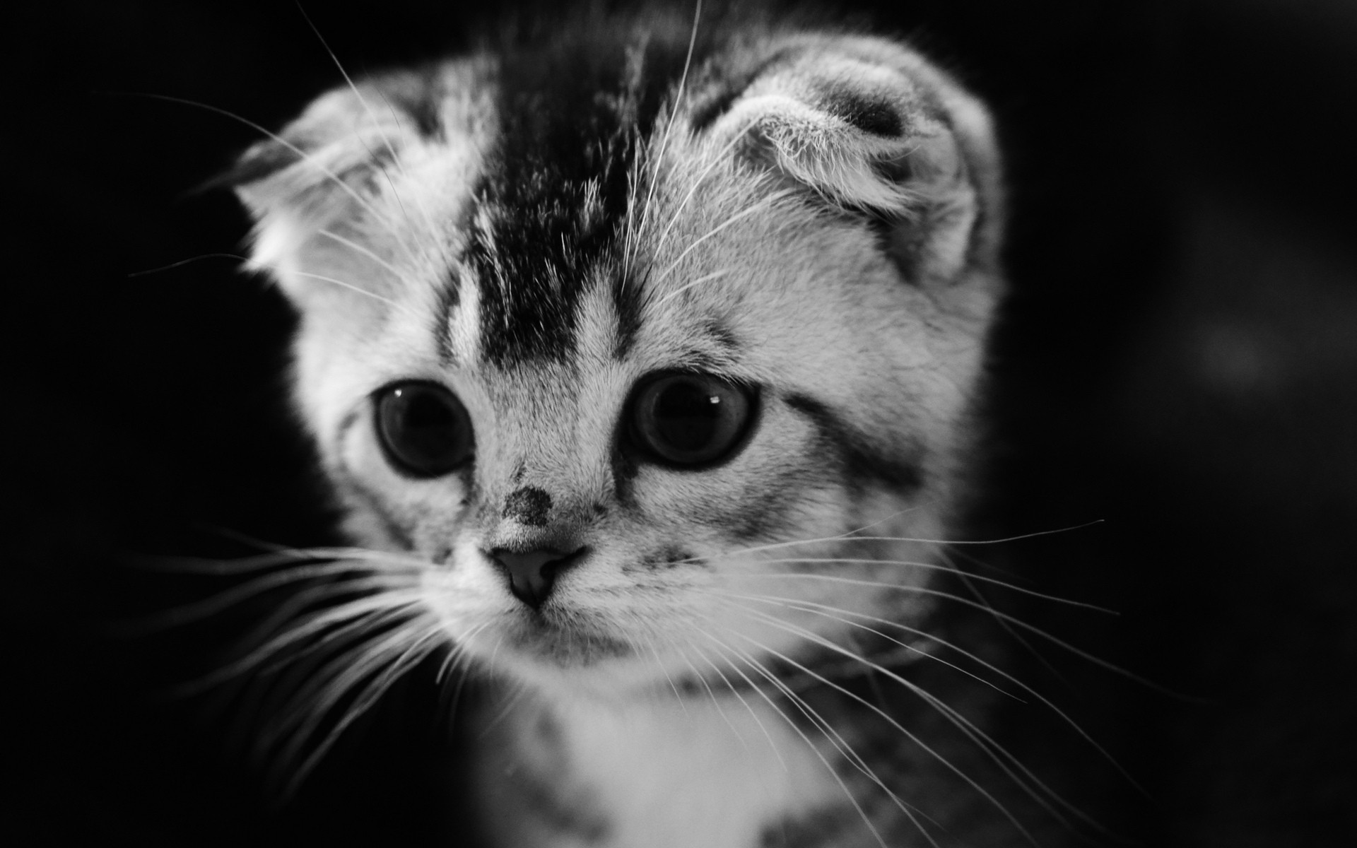 Красивые черно белые картинки маленькие