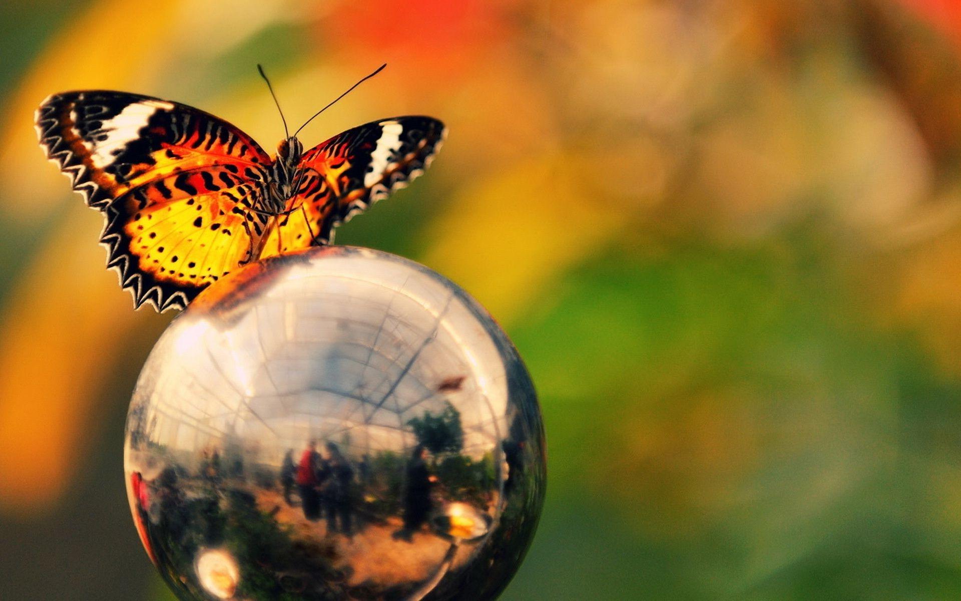 Обои яркость, шар, цвета. Макро foto 7