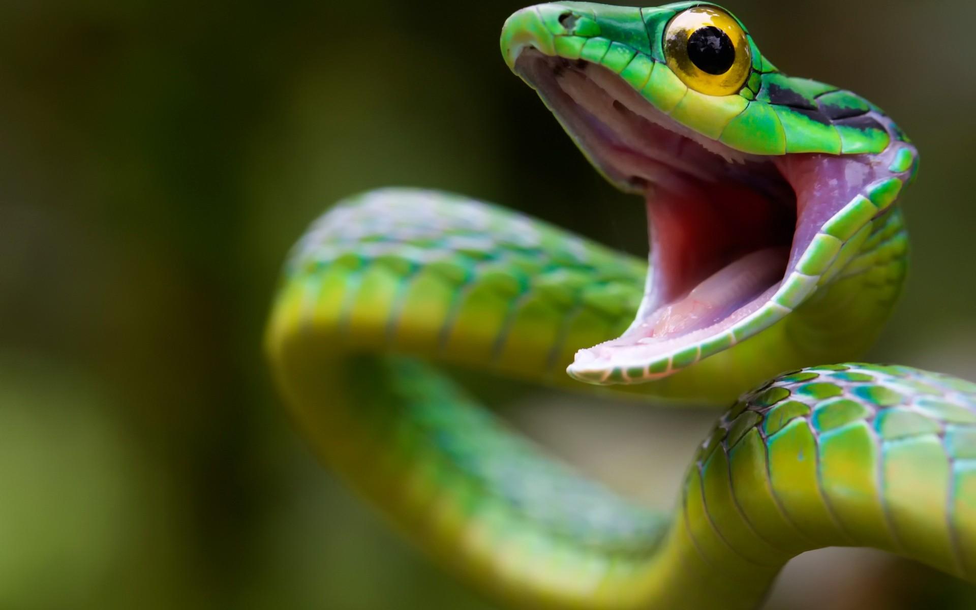 snake-alexis-seg-lesbian-porn-game