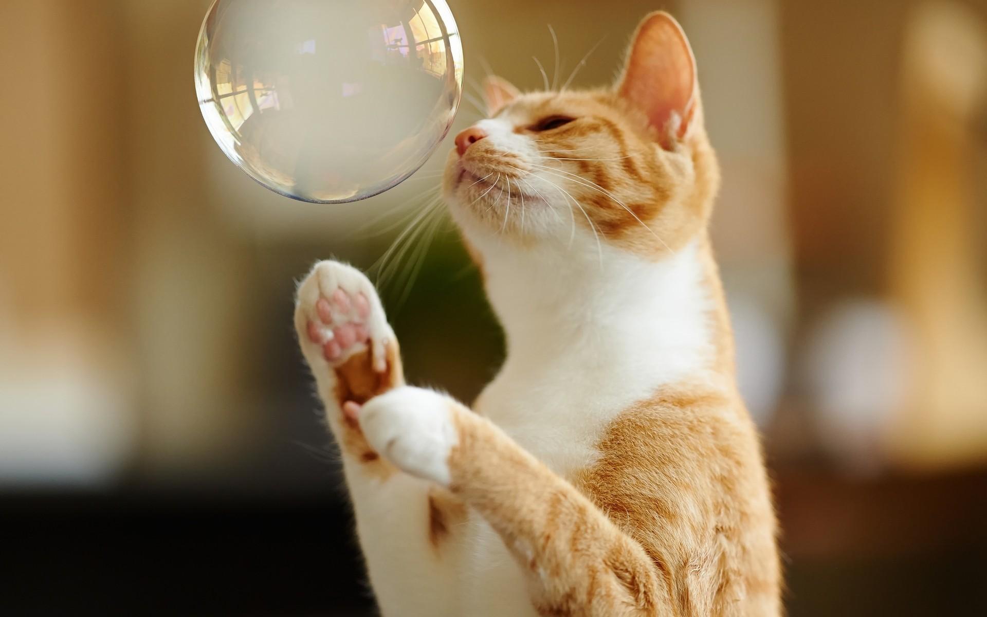 Красивые картинки приколы кошки, для открыток