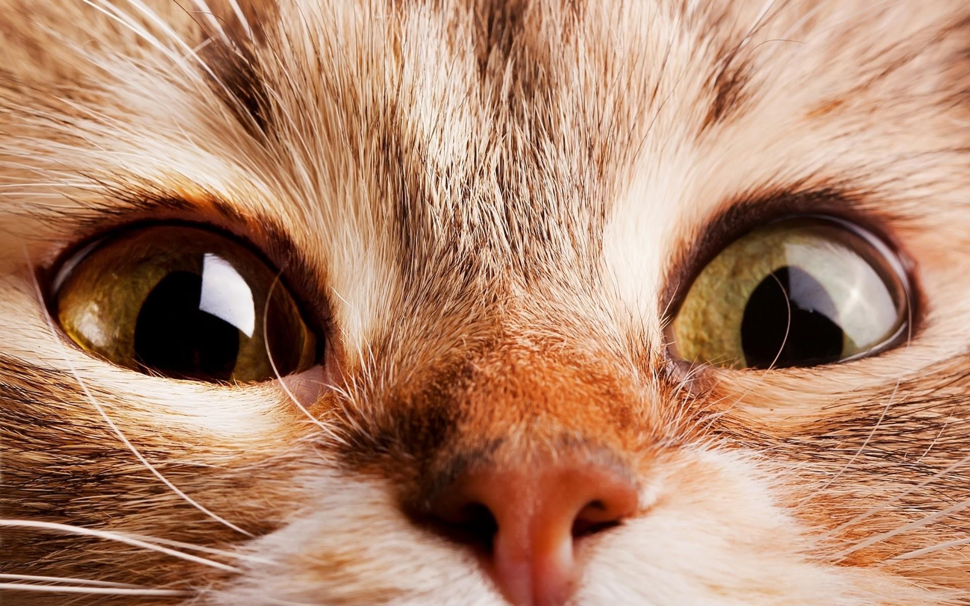 Картинки на телефон глаза животных, марта написанные