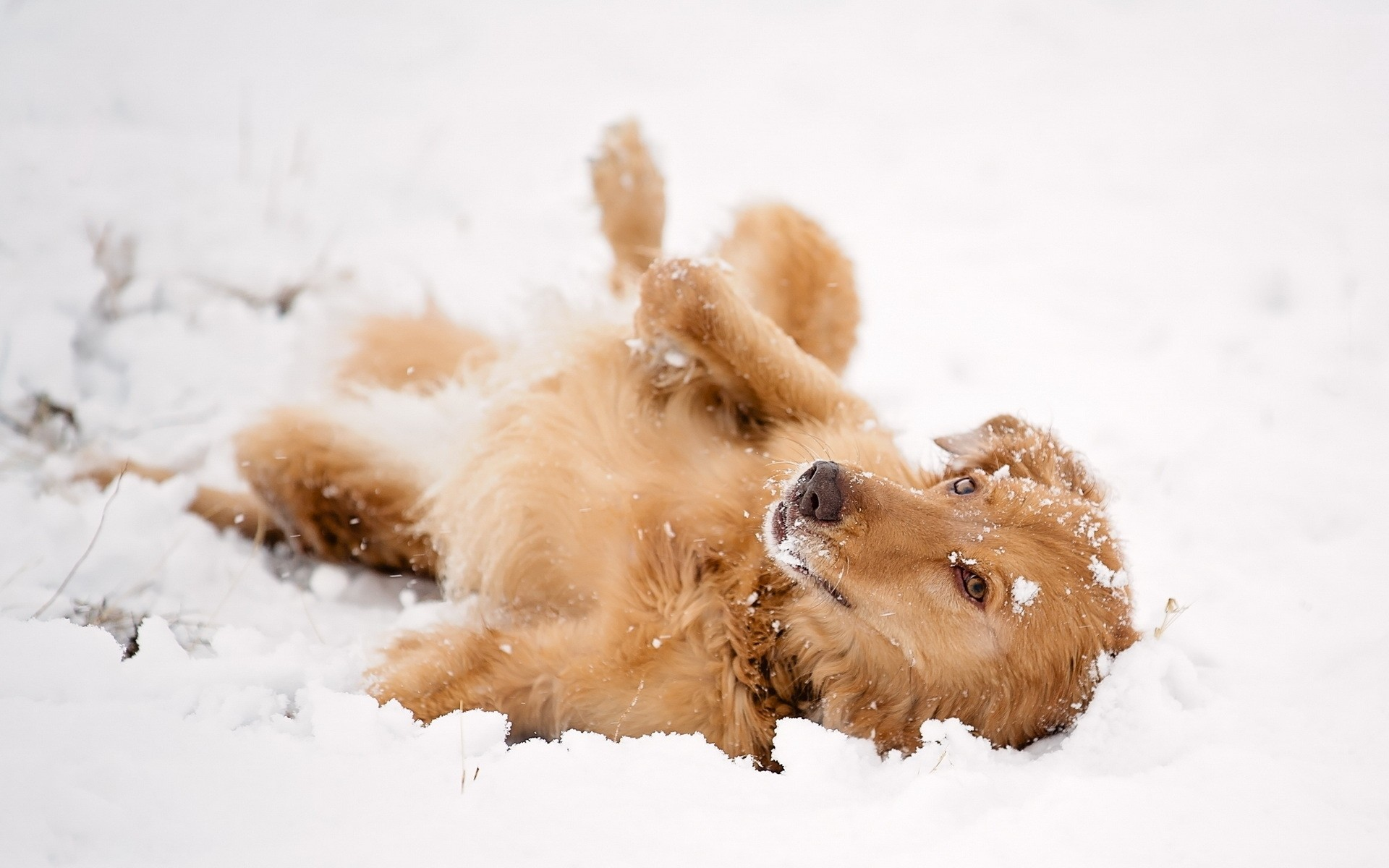 собака снег морда одиночество без смс