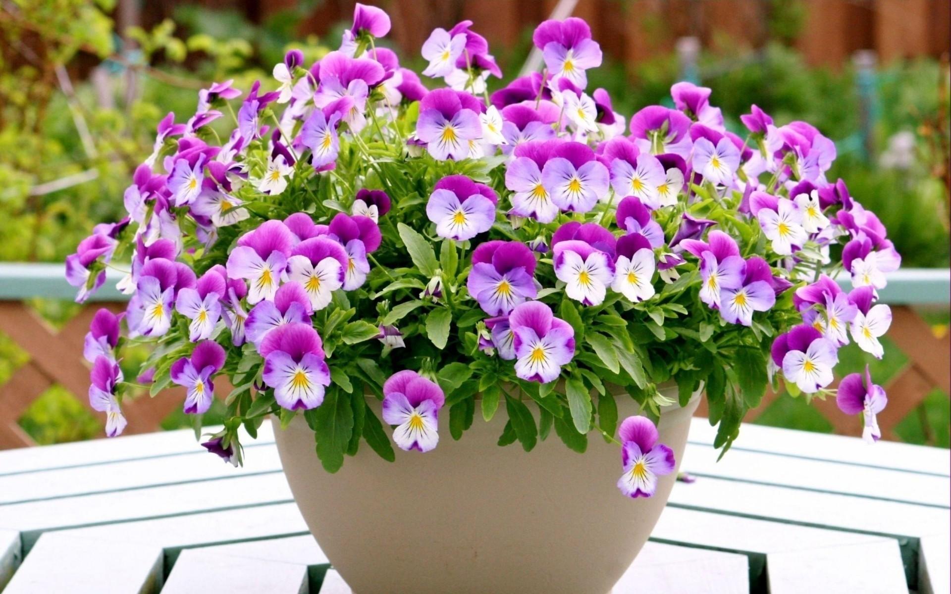 Сон про цветы в горшках, купить спб