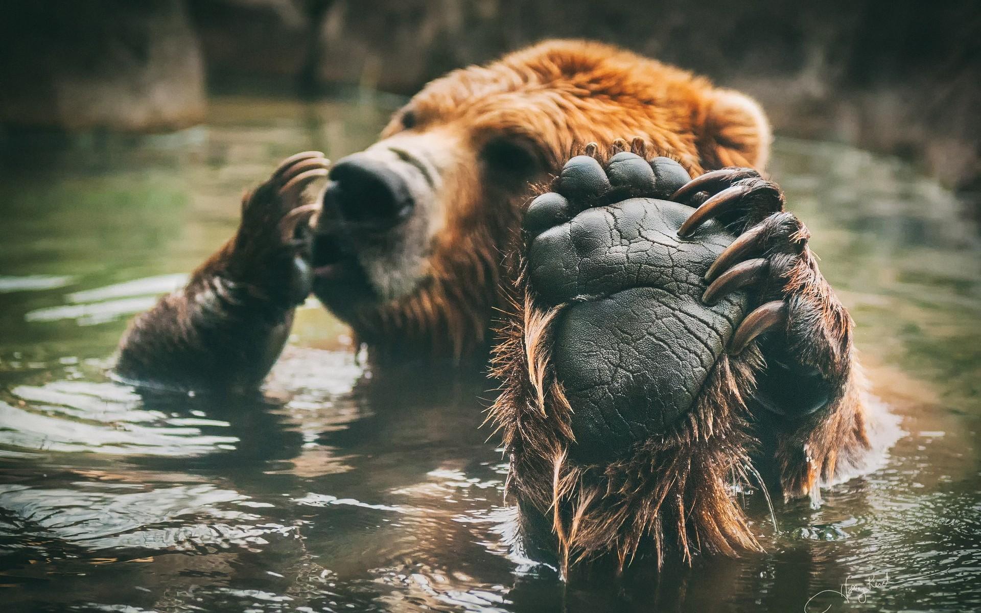Медведь классные картинки