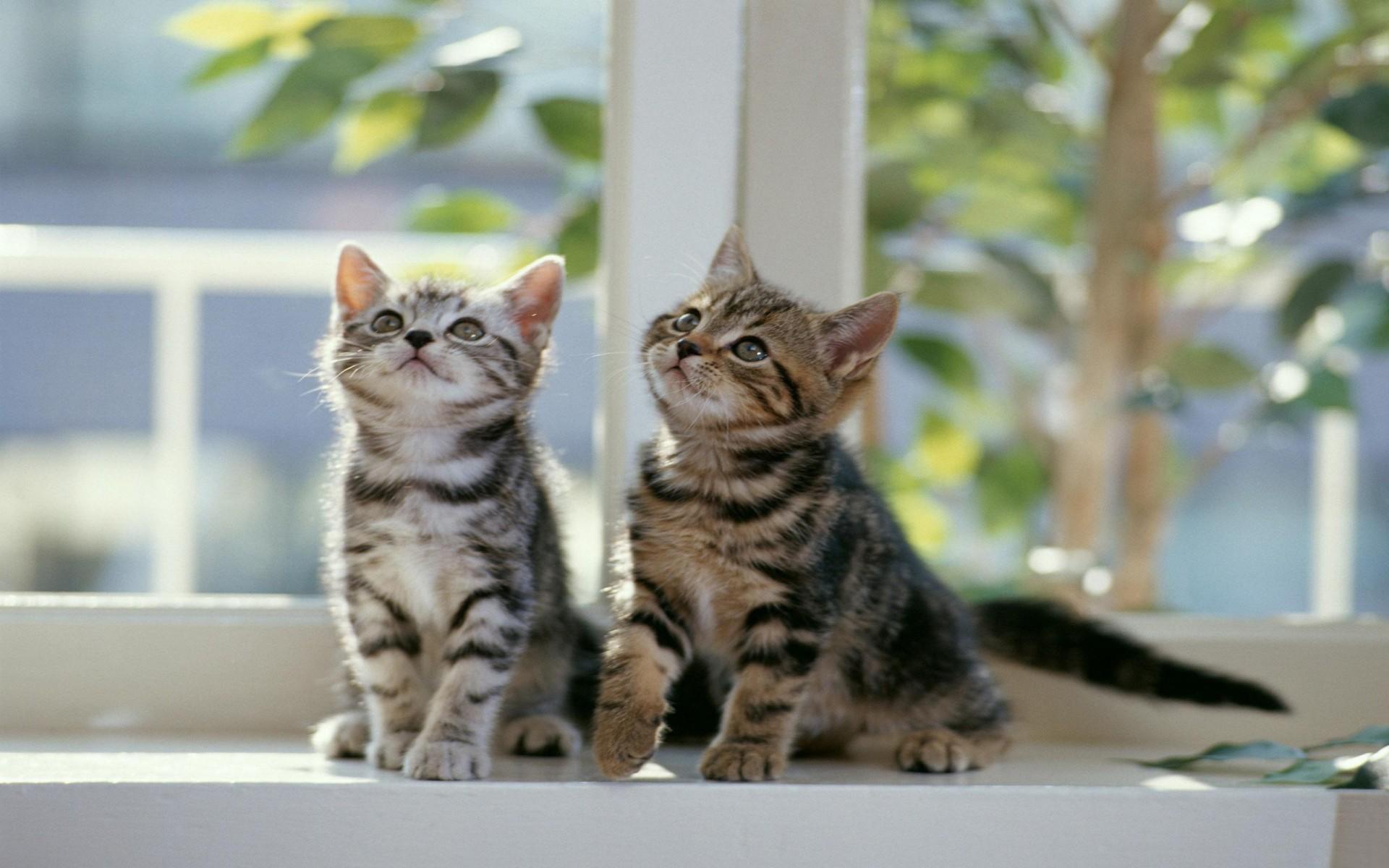 Котята прикольные фото и картинки