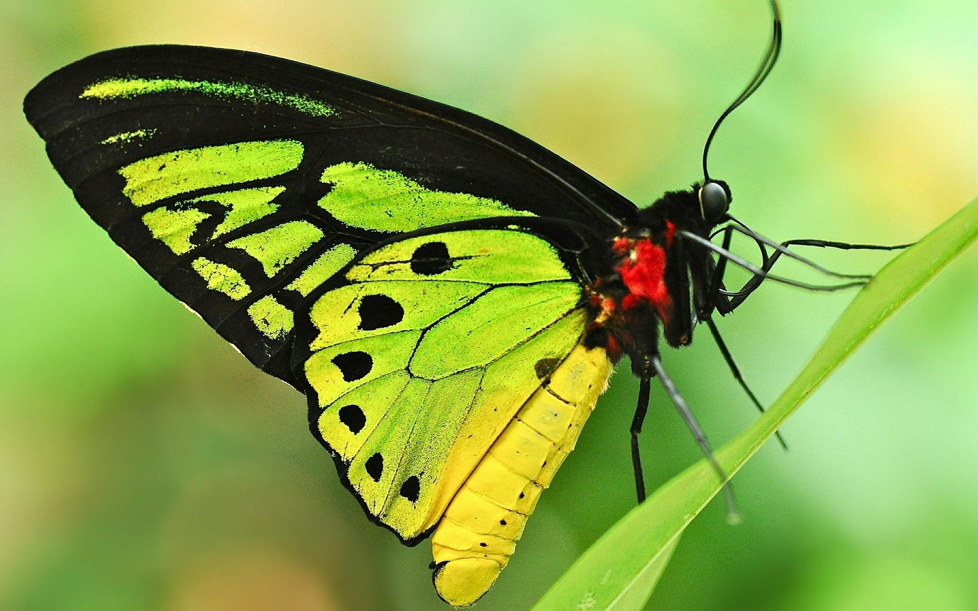 Днем, картинка бабочки