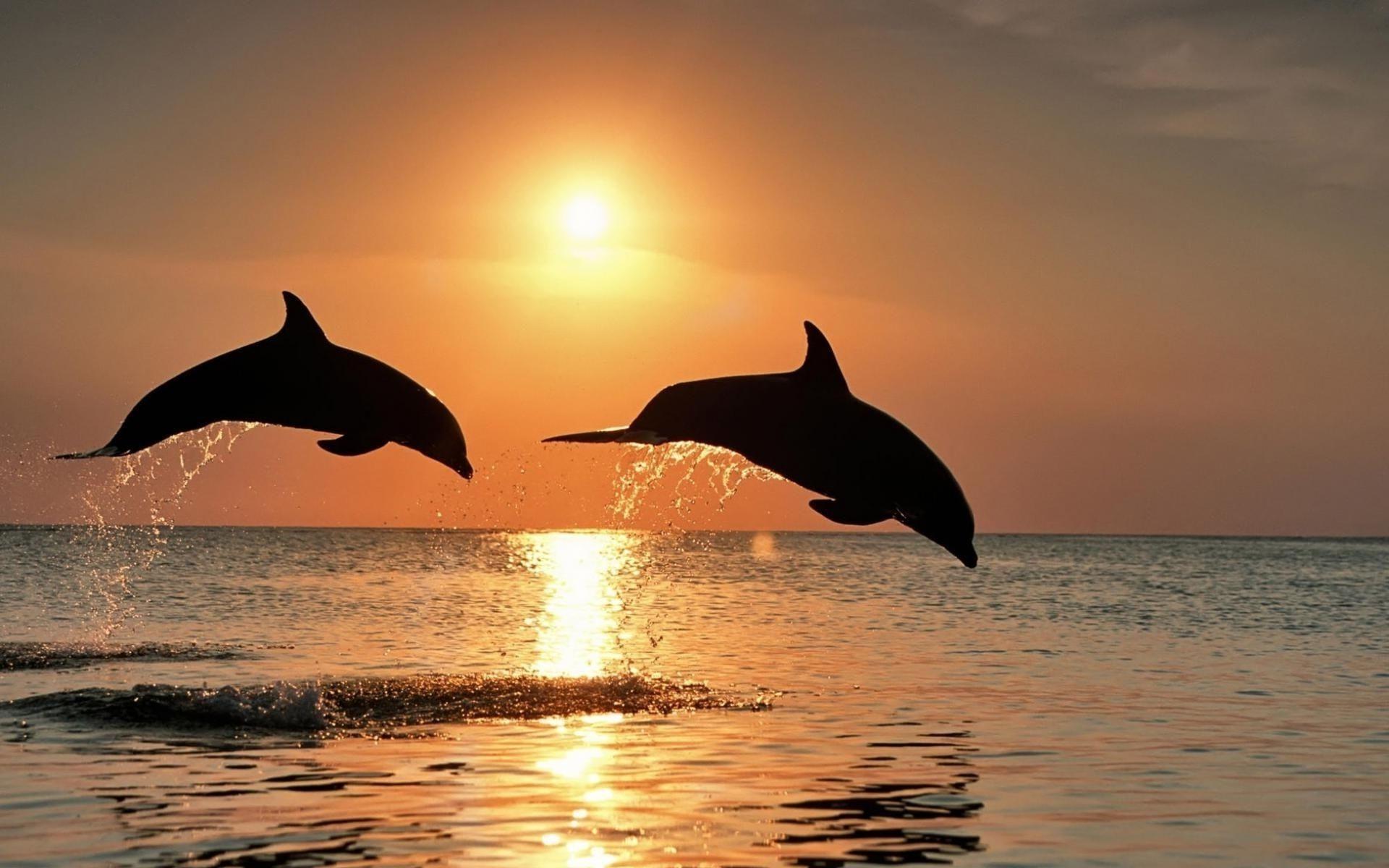 Дельфины обои для рабочего стола картинки животных на