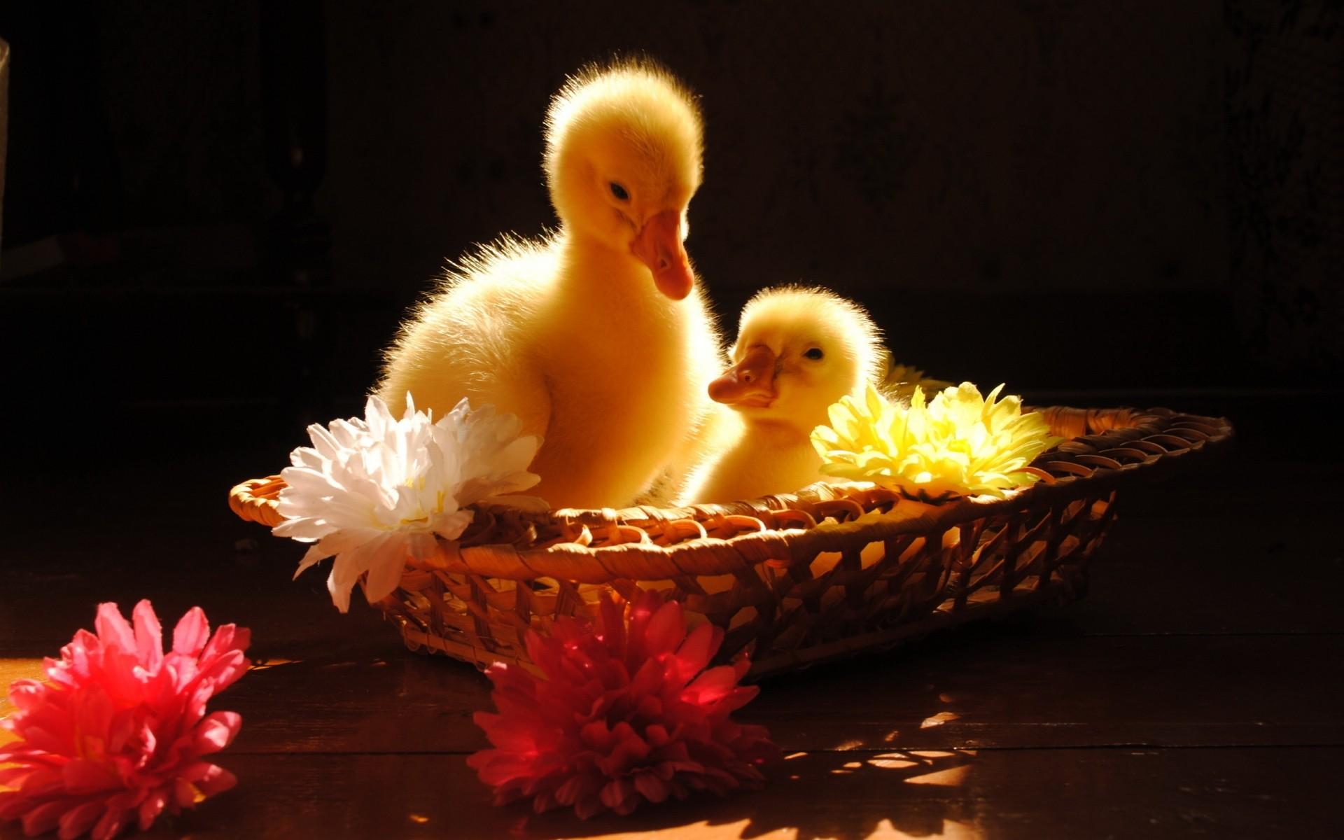 Осень открытки, доброе утро картинки красивые с животными и птицами движущиеся