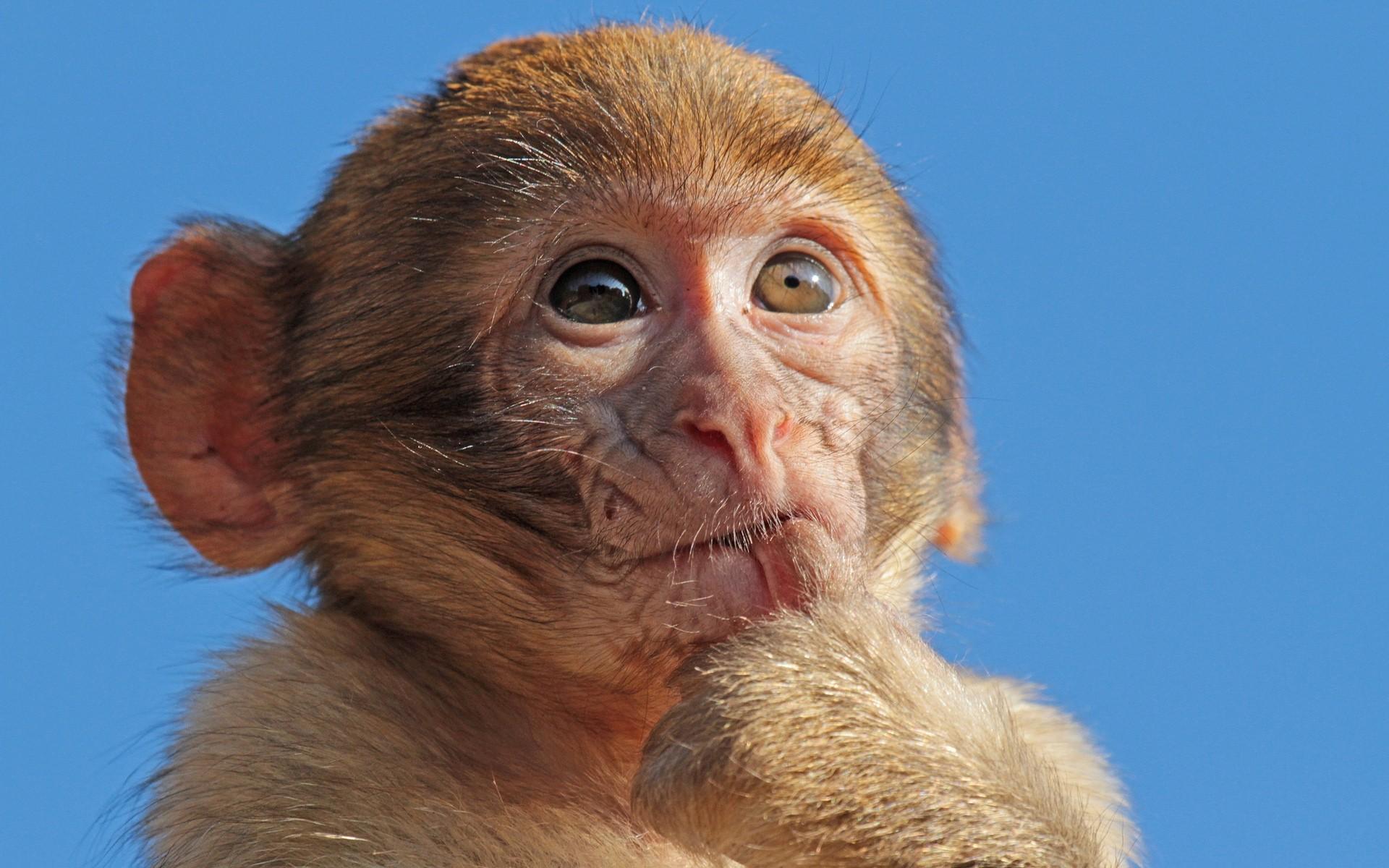 Приматы картинки смешные