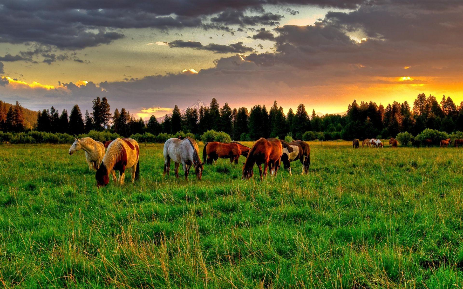 лошадь, трава, закат  № 2683 загрузить