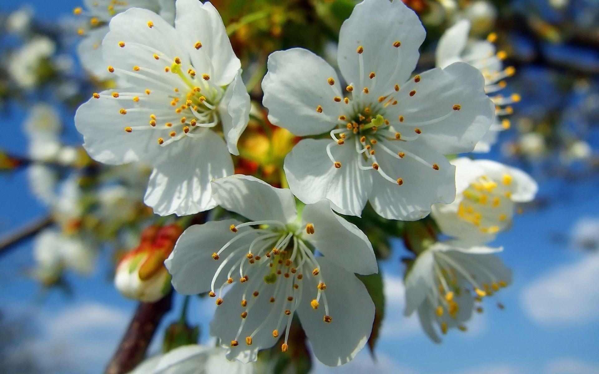 картинки весна апрель на рабочий стол была возможность